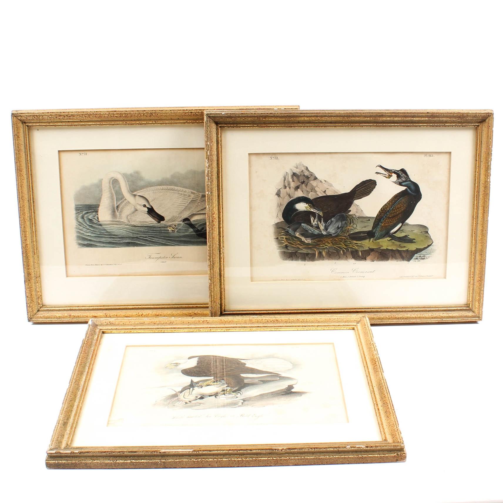J. J. Audubon Octavo Lithographs Including Bald Eagle and Trumpeter Swan