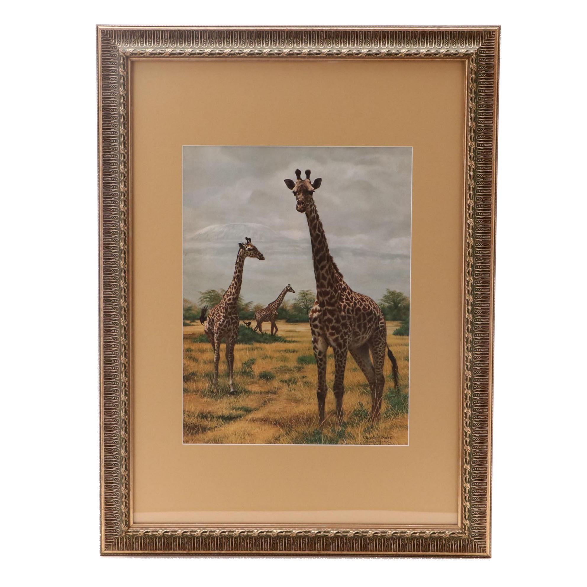 Charles Fracé Offset Lithograph of Giraffes
