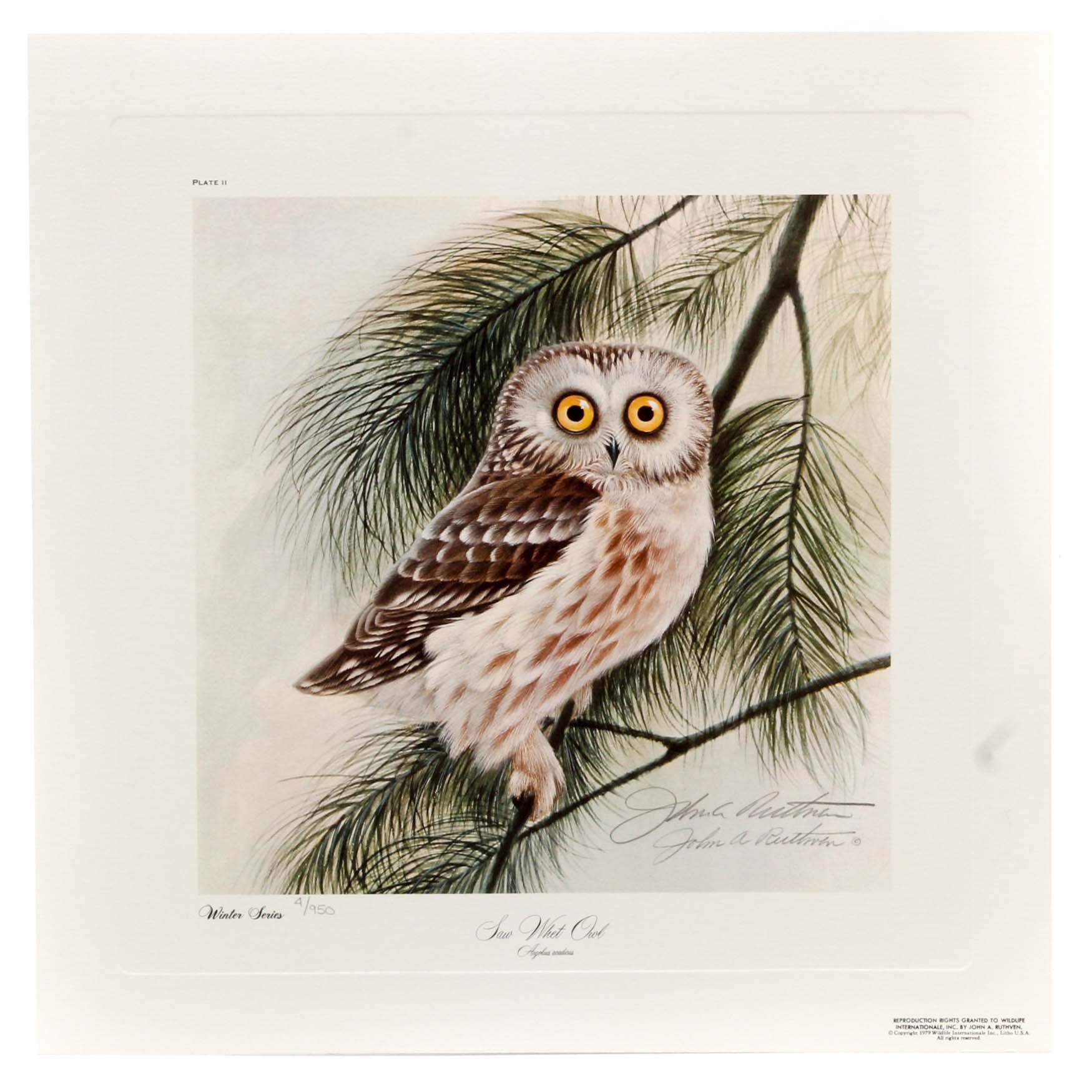 """John Ruthven Limited Edition """"Saw Whet Owl"""" from """"Winter Series"""""""