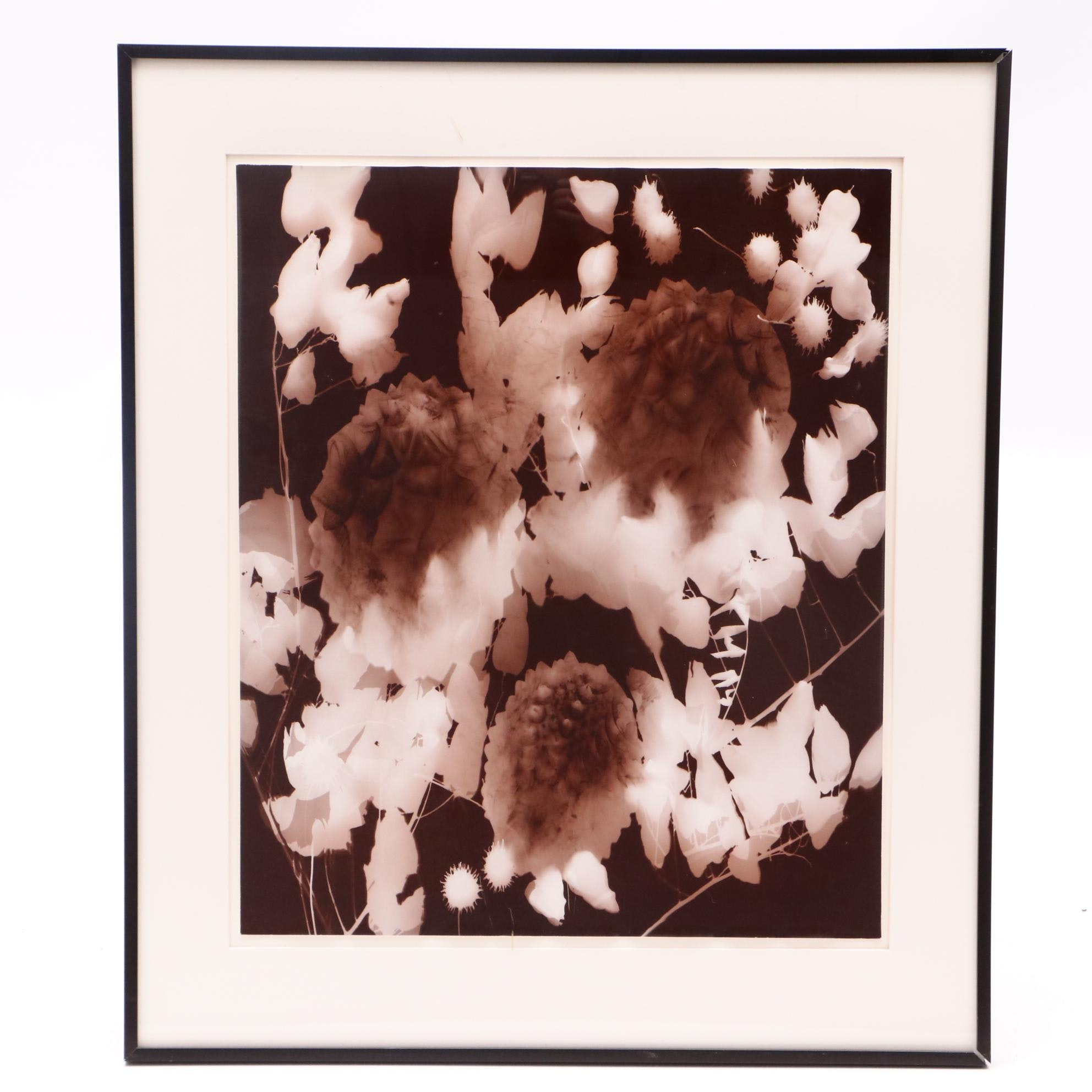 Anita Douthat Photogram of Botanical Forms