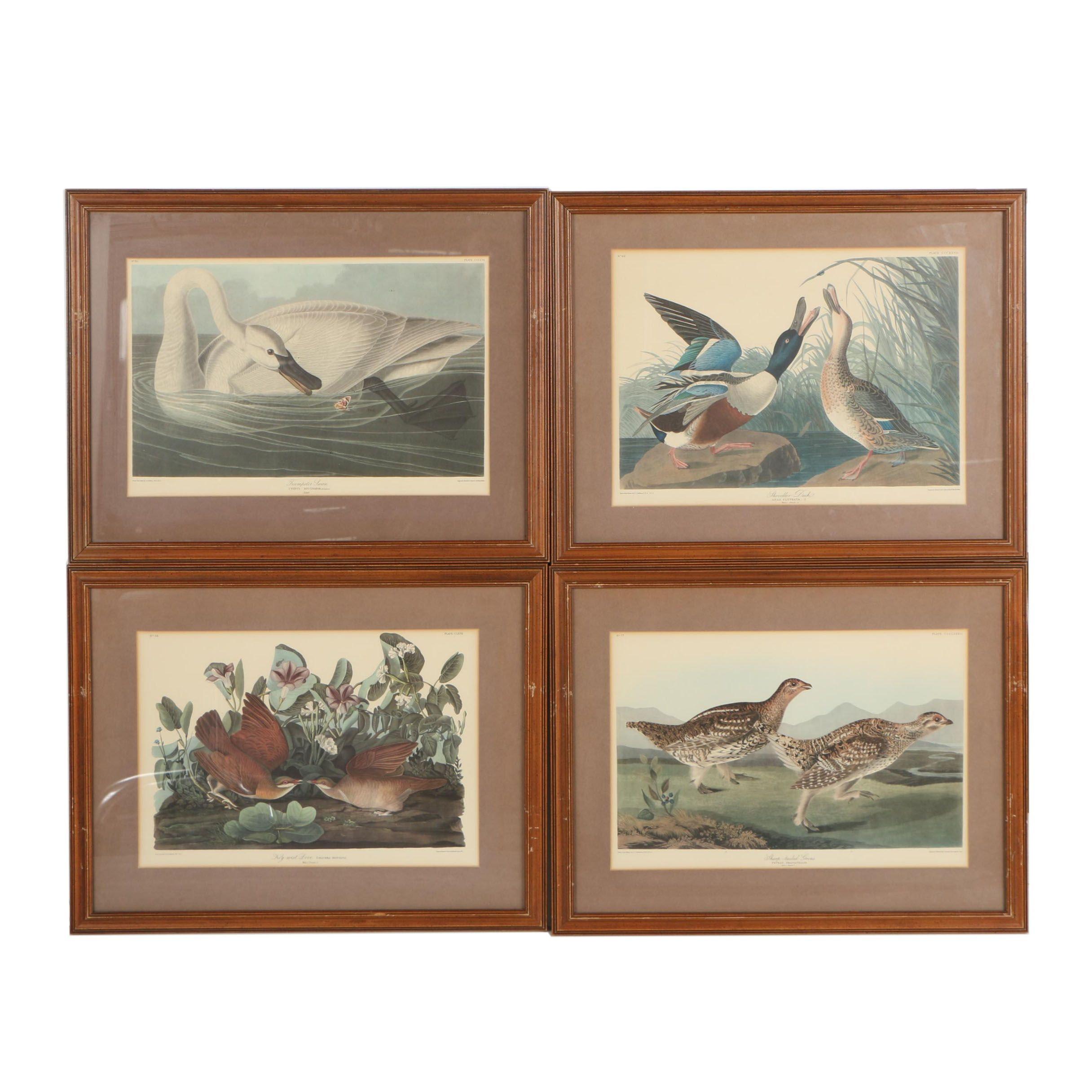 Offset Lithographs after B. Havell after John J. Audubon