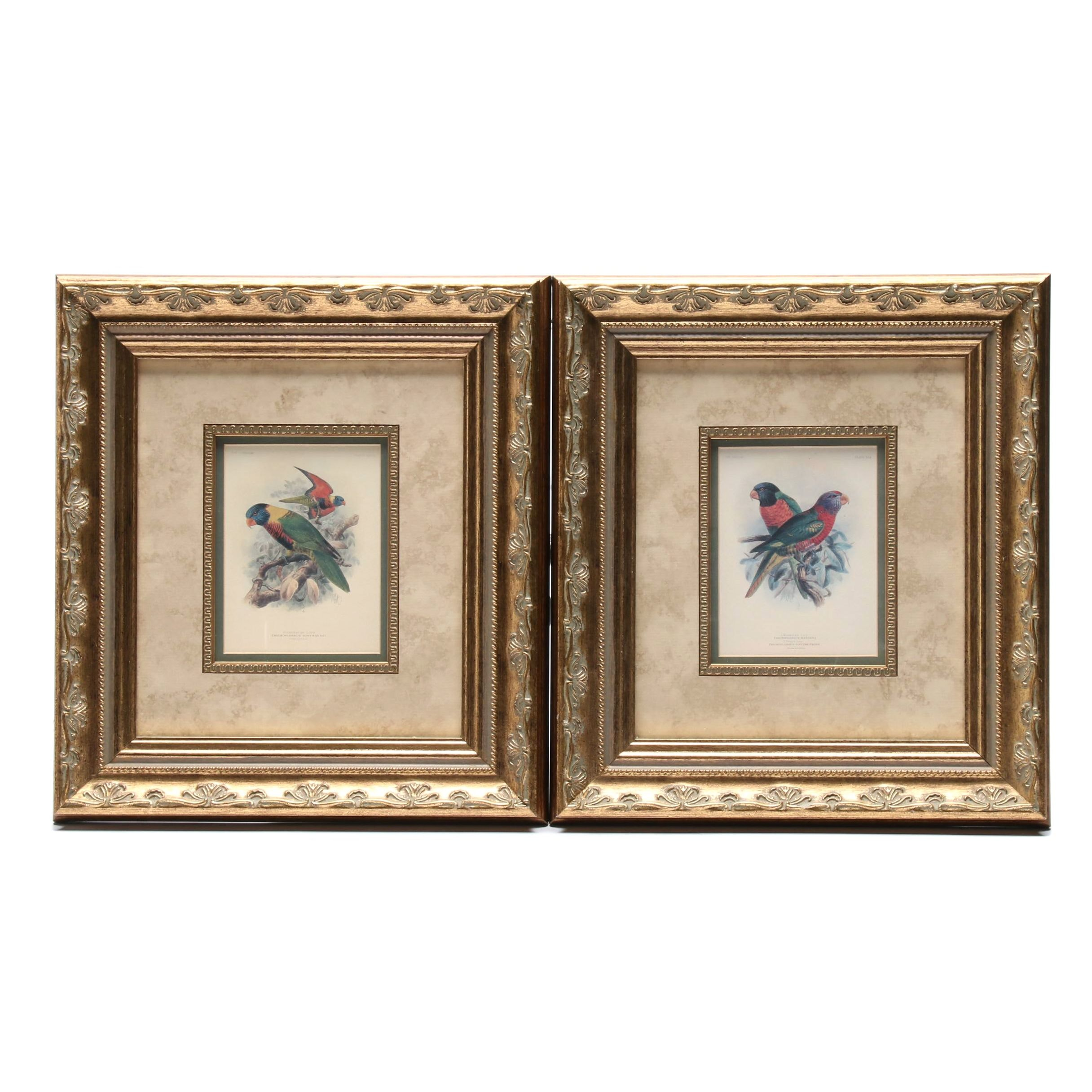 Offset Lithograph of Lory Parrots After R.H. Porter
