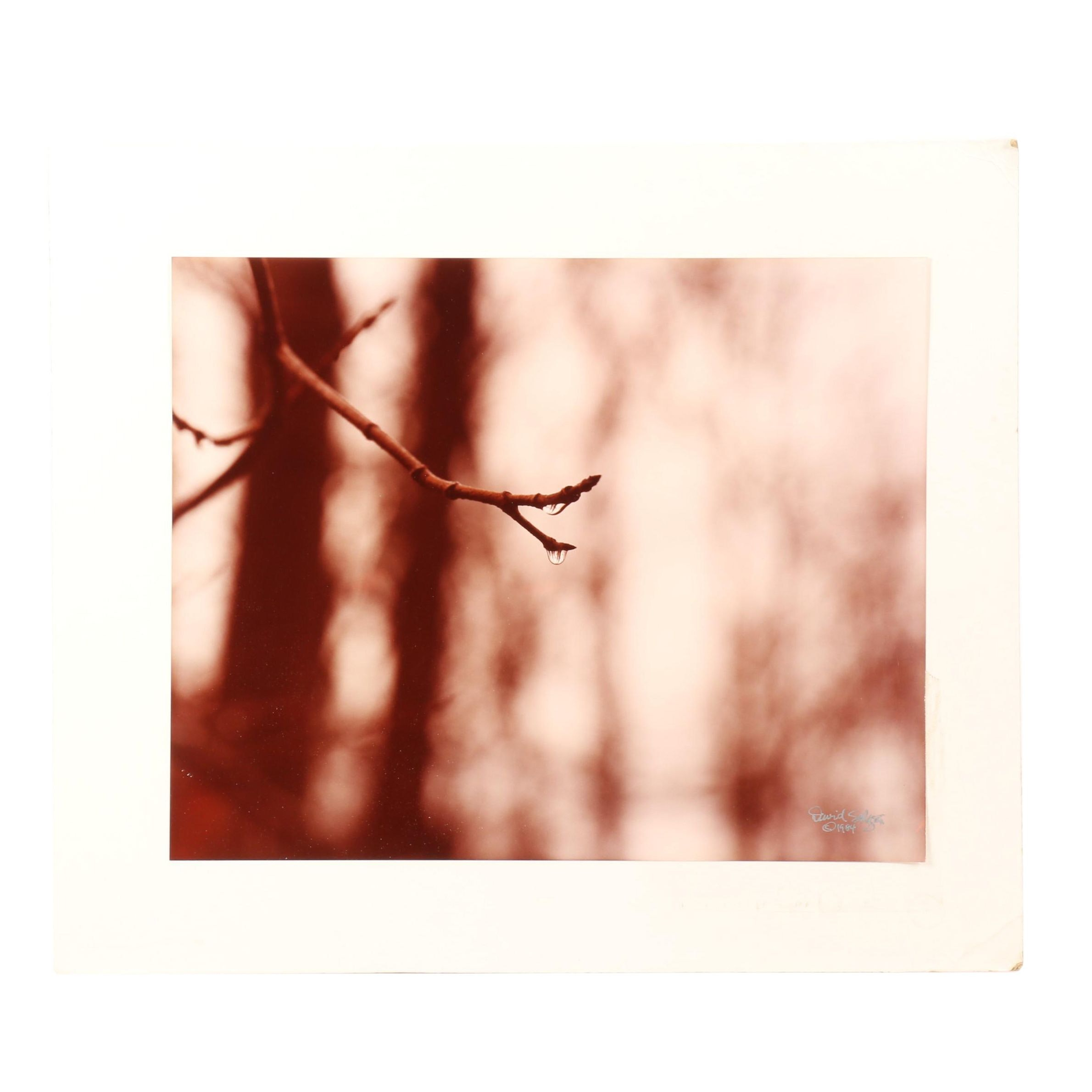 David Seltzer 1984 Photograph of Branch with Water Droplets