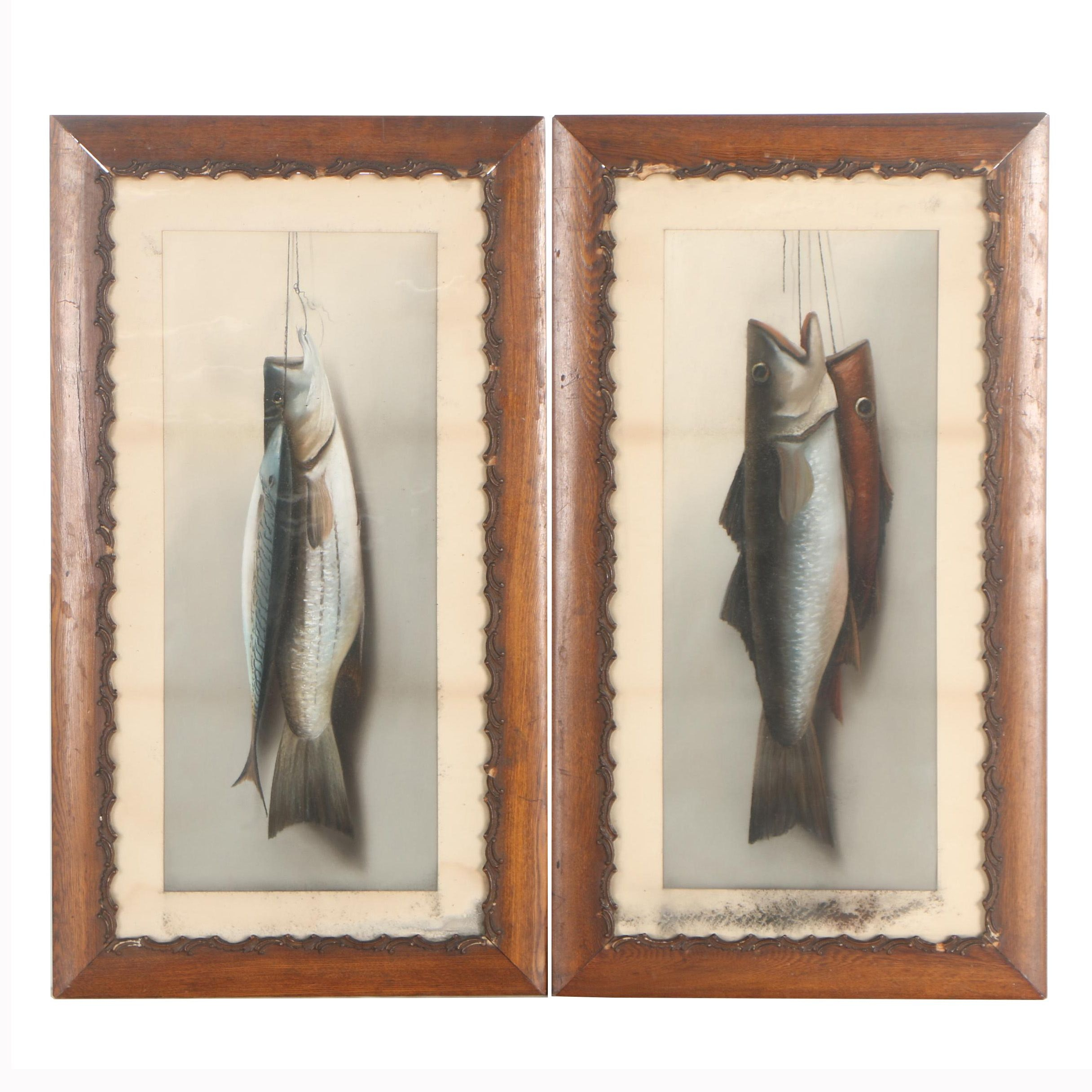 Vintage Pastel Drawings of Fish