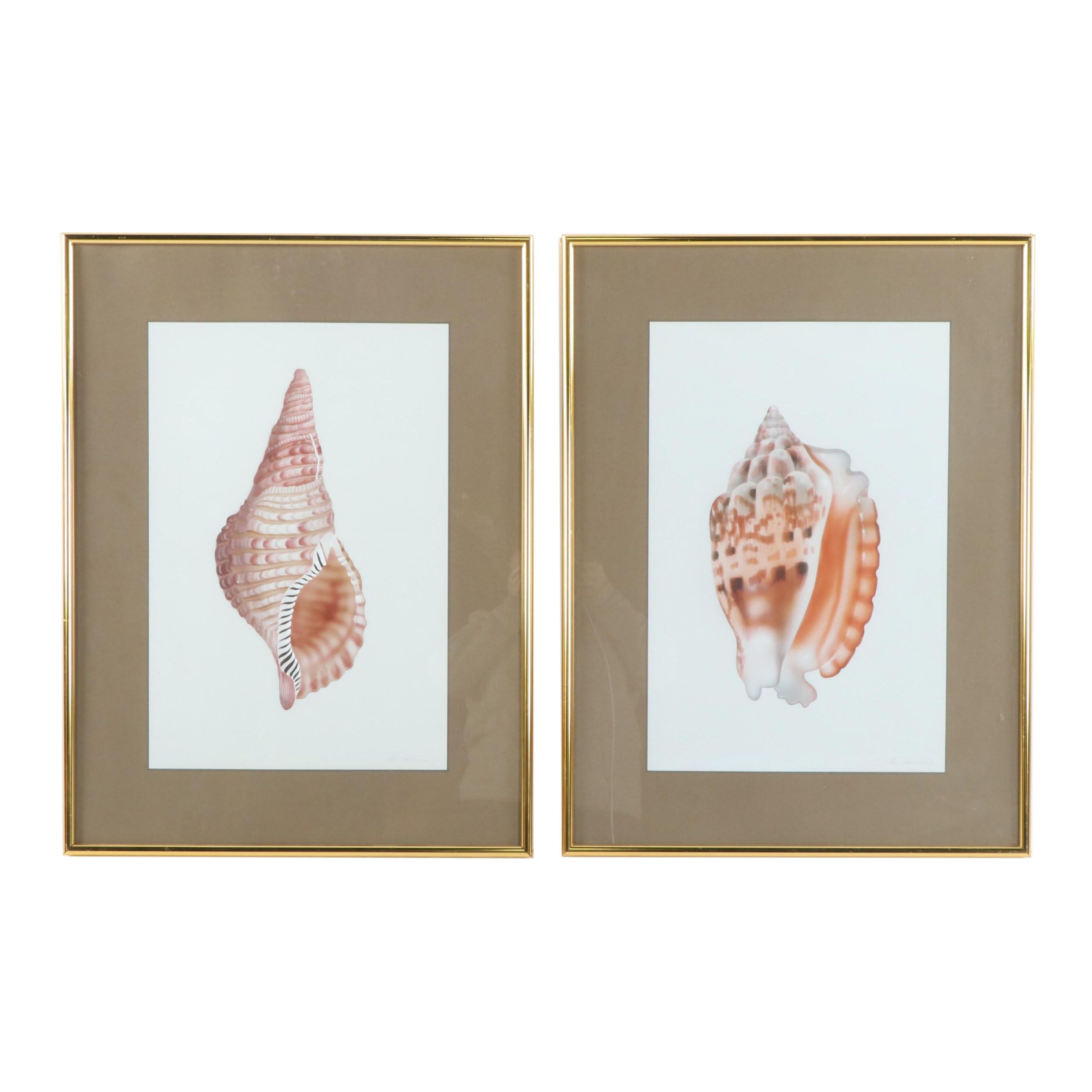H. Sahina Seashell Acrylic Paintings on Silk