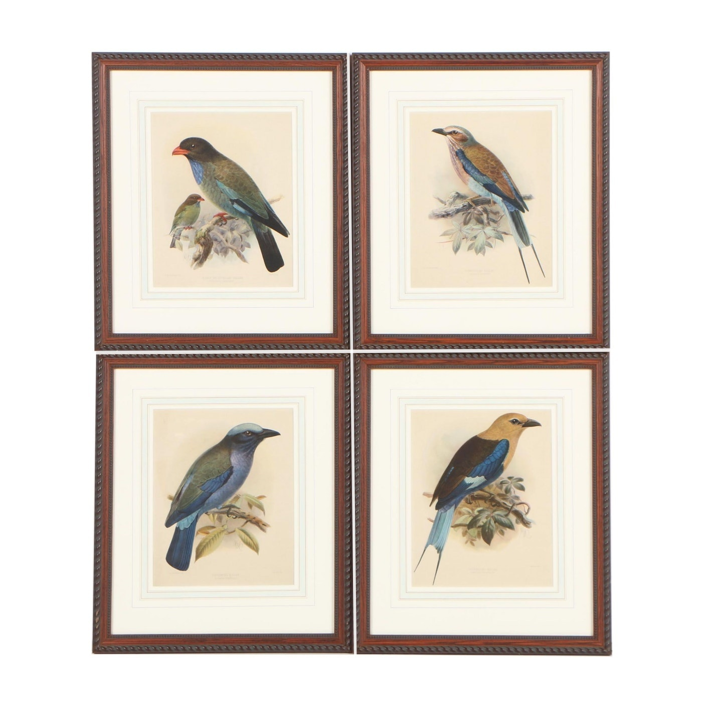 Offset Lithographs after John Gerrard Keulemans