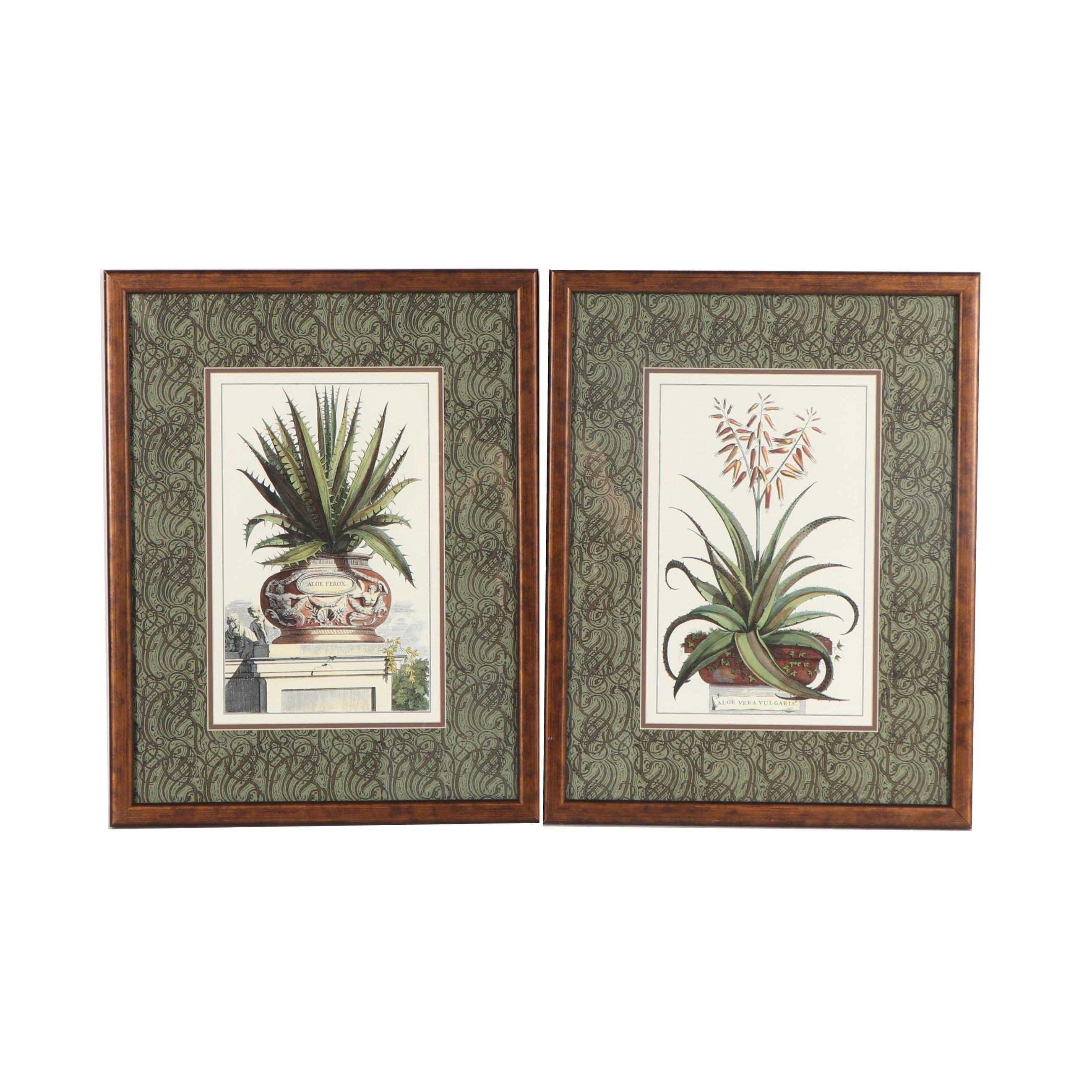 Botanical Lithographs after Abraham Munting
