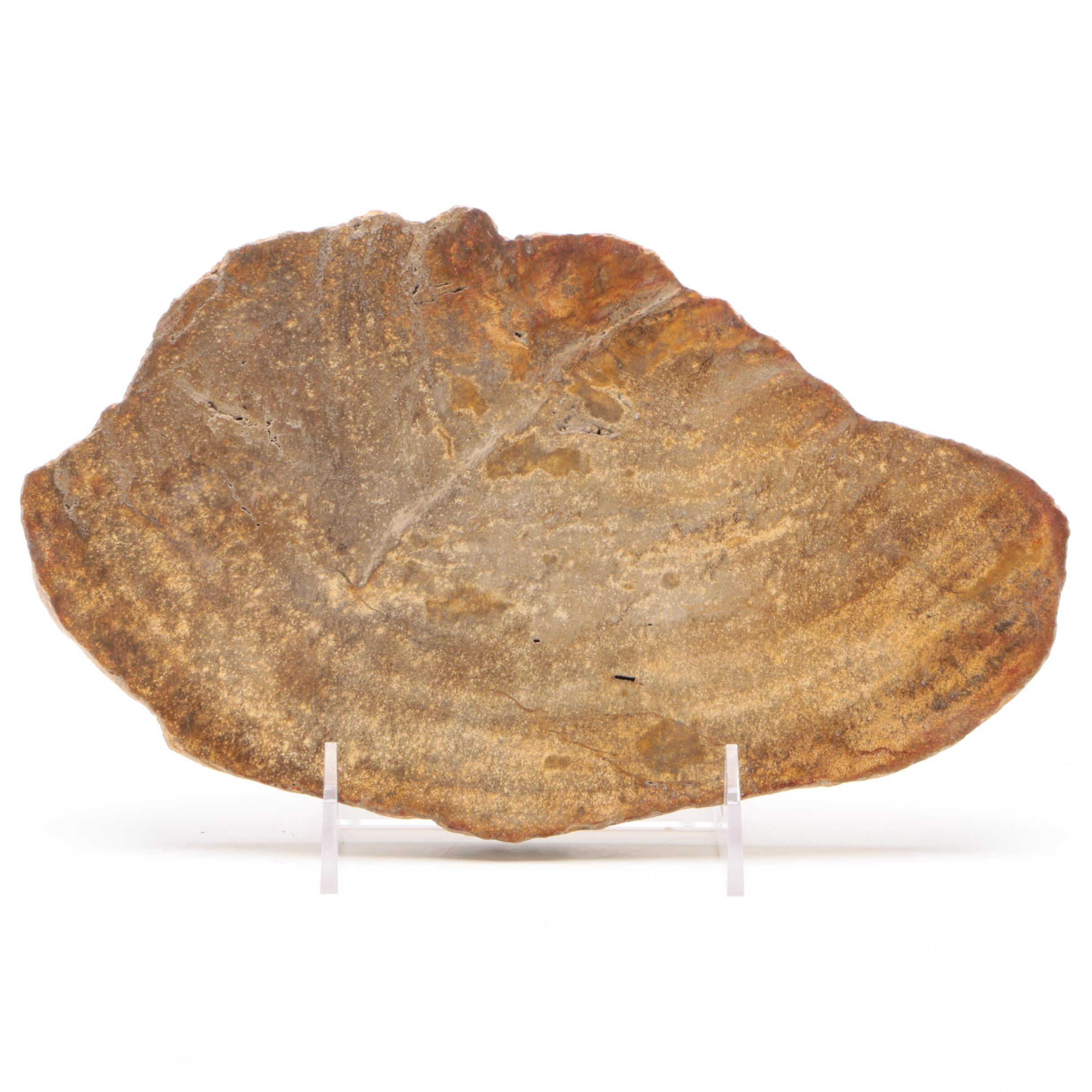 Indonesian Polished Petrified Wood Slab