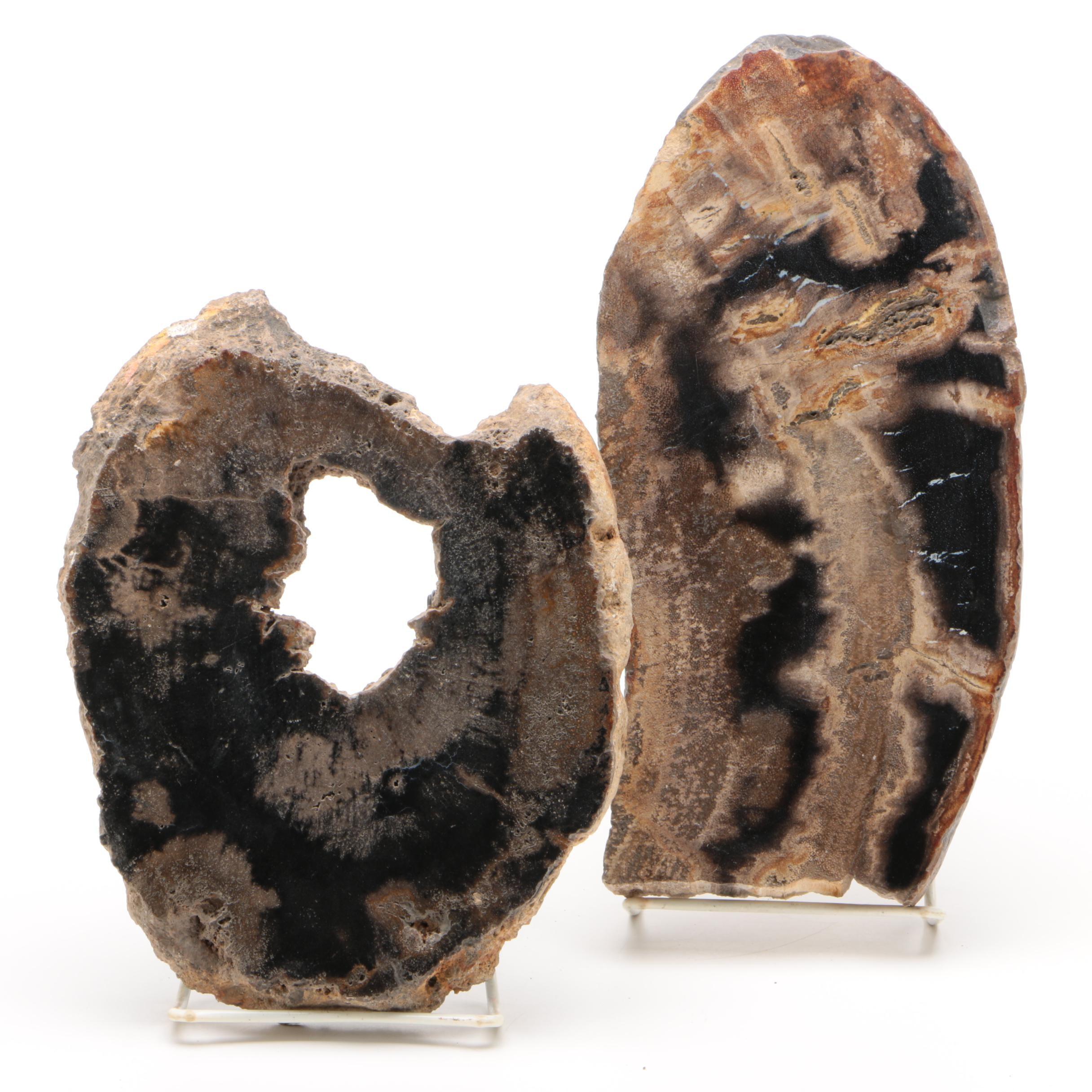 Indonesian Polished Petrified Wood Slabs