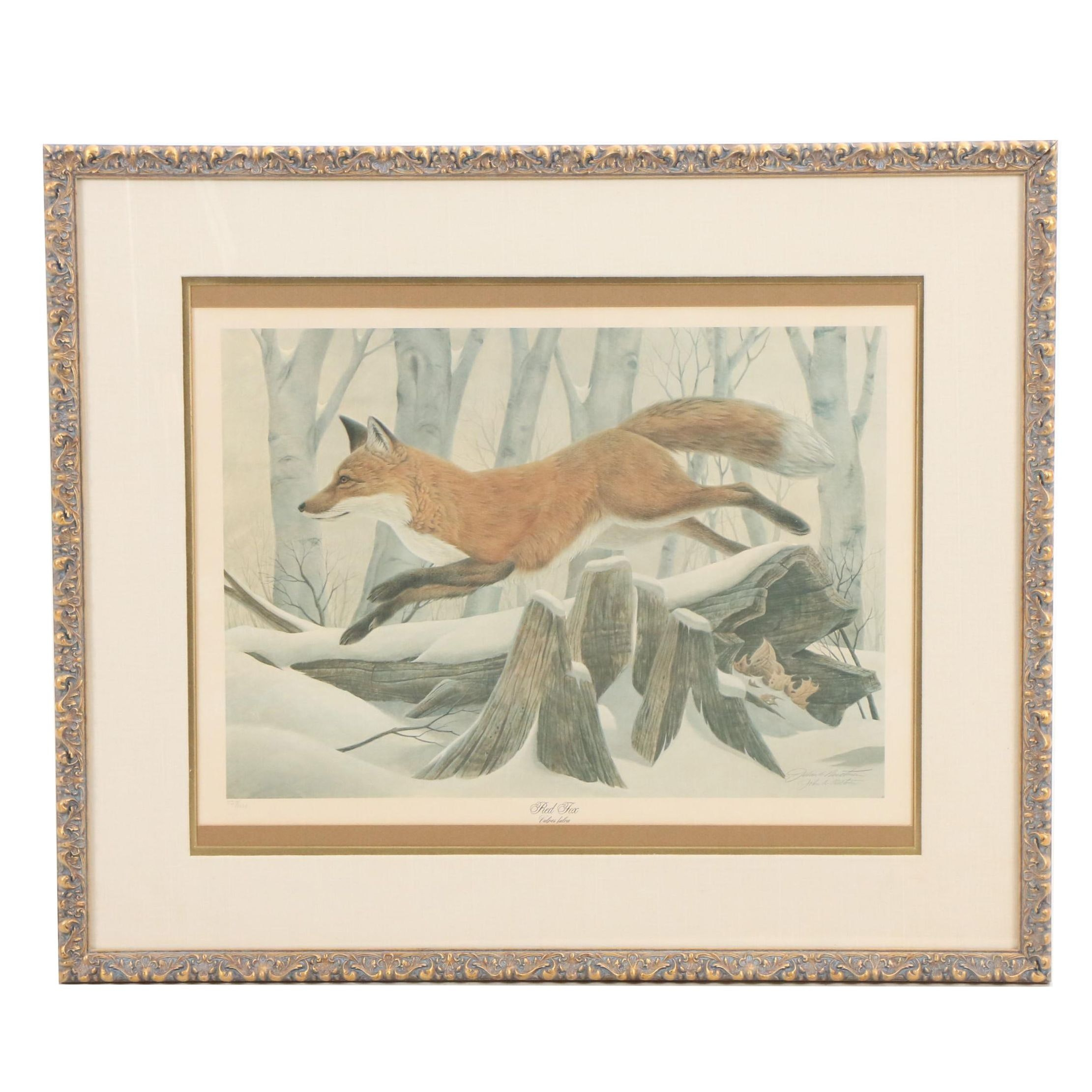 "John Ruthven Limited Edition Offset Lithograph ""Red Fox"""