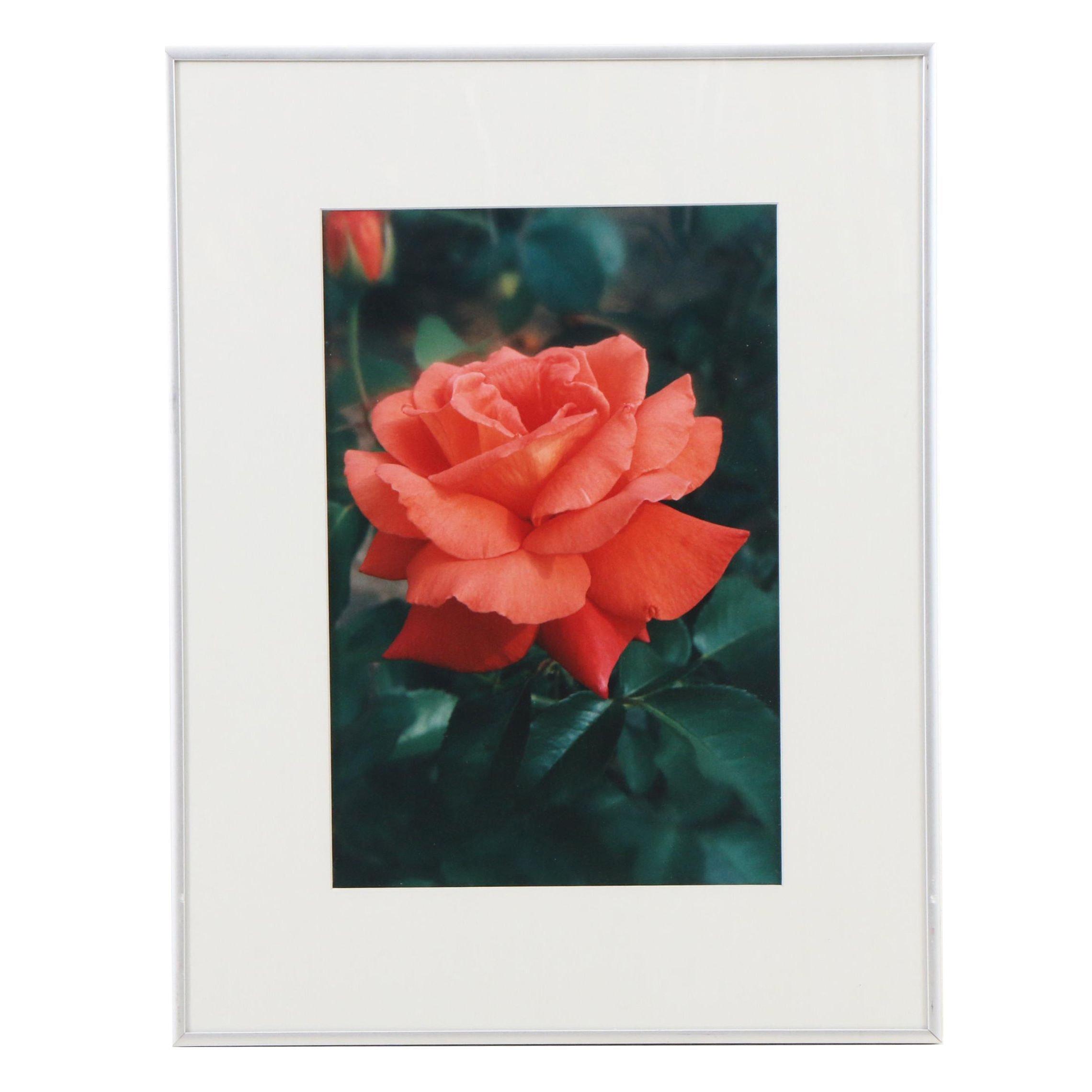 Louis Papp Salmon Rose Photographic Print