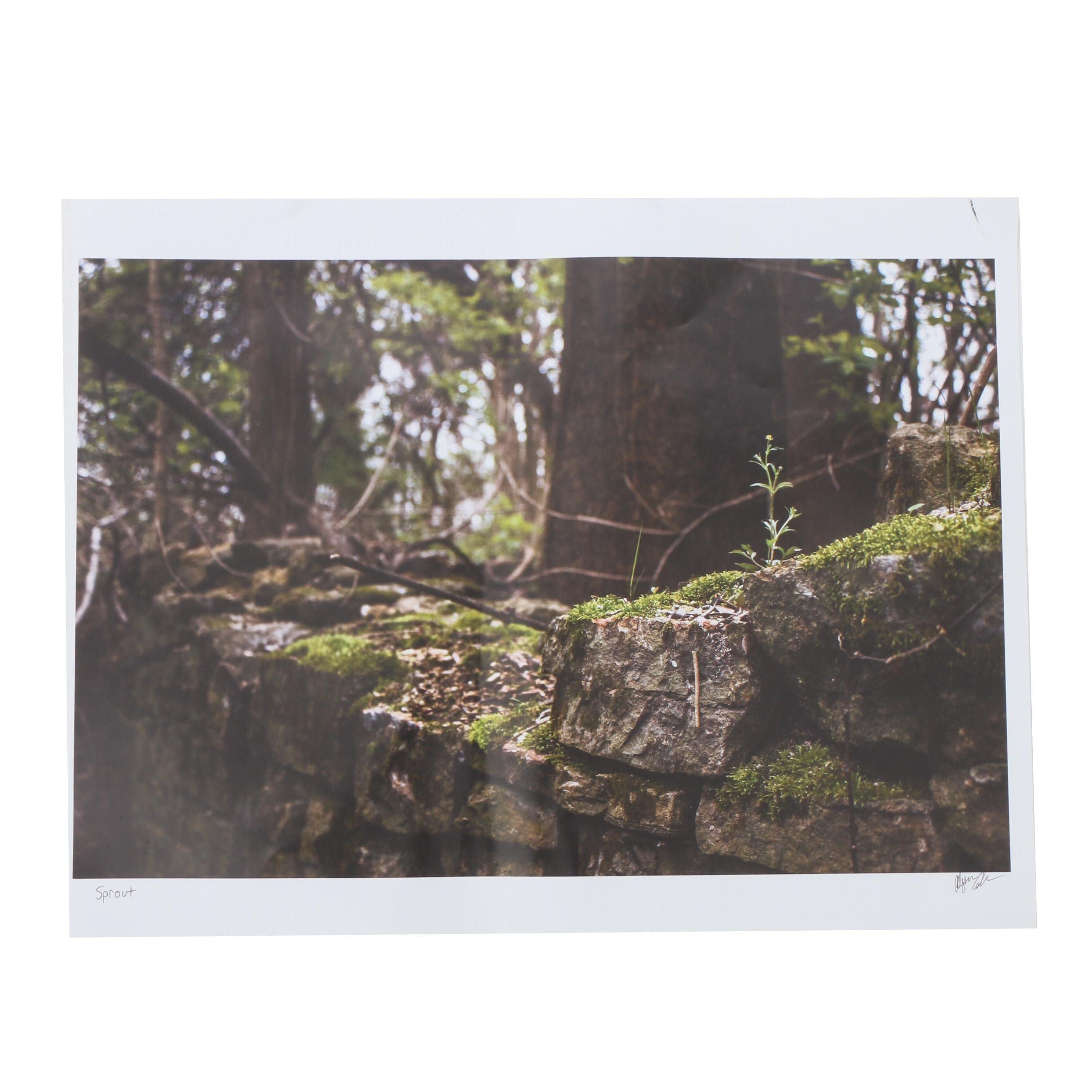 "Alyssa Coler Chromogenic Color Photograph ""Sprout"""