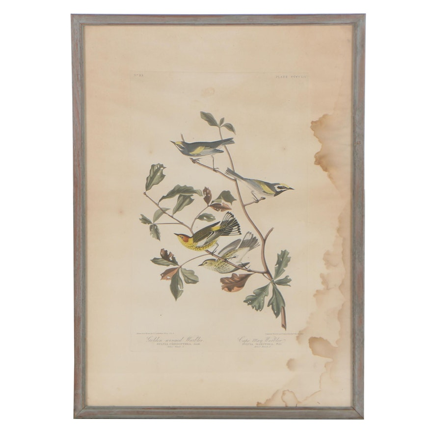 """Havell Edition Hand-Colored Engraving from J.J. Audubon's """"The Birds of America"""""""