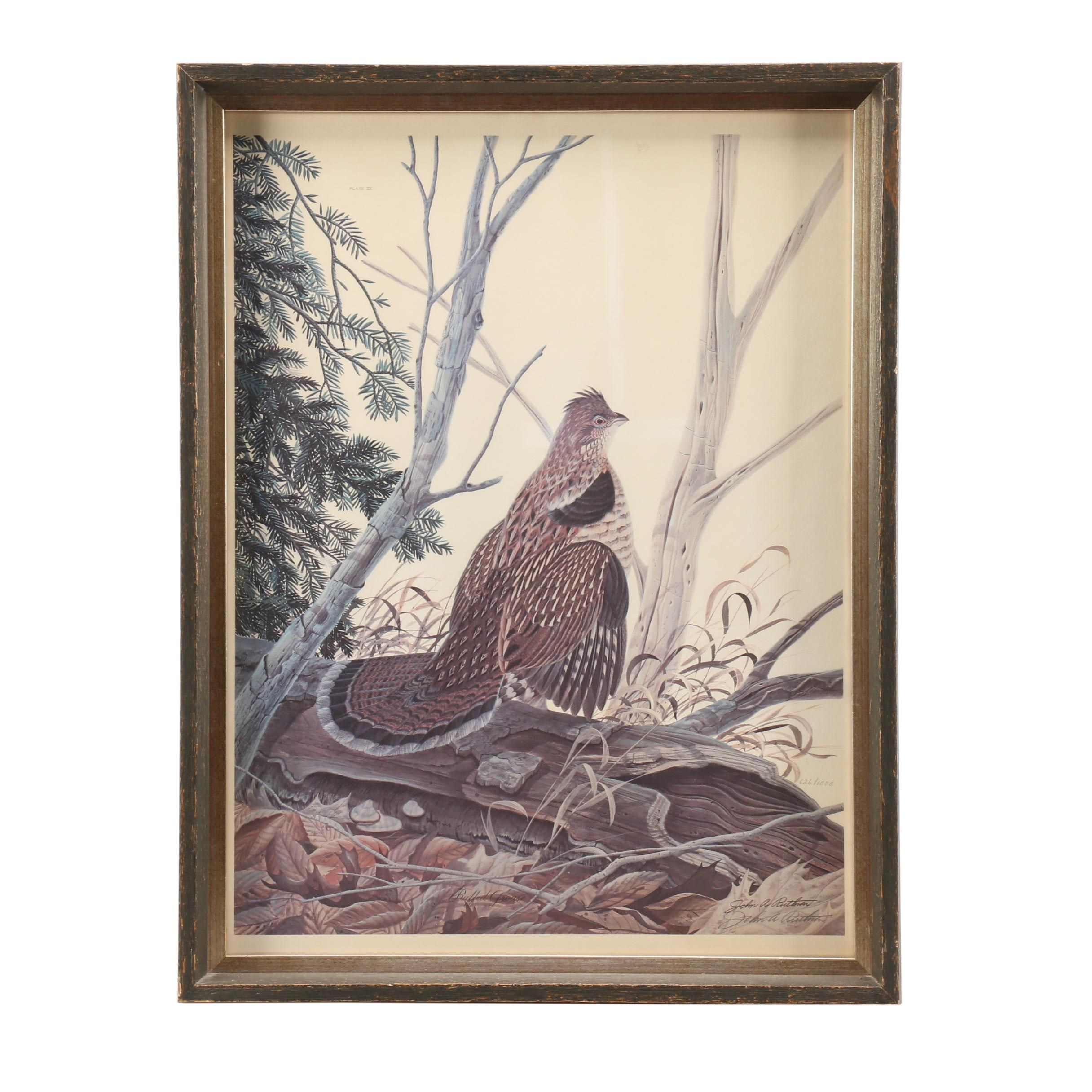 """John Ruthven Limited Edition Offset Lithograph """"Ruffed Grouse"""""""