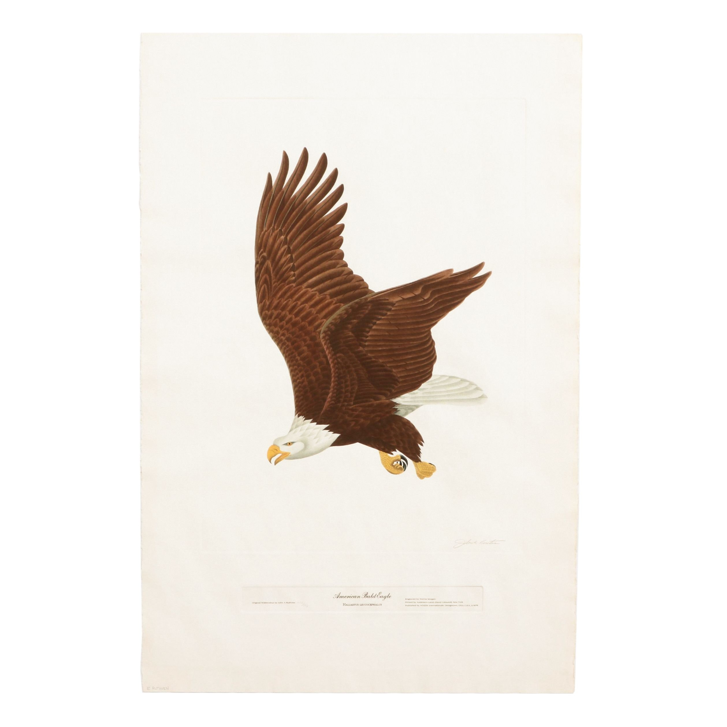 "John Ruthven Limited Edition Lithograph ""Bald Eagle"""