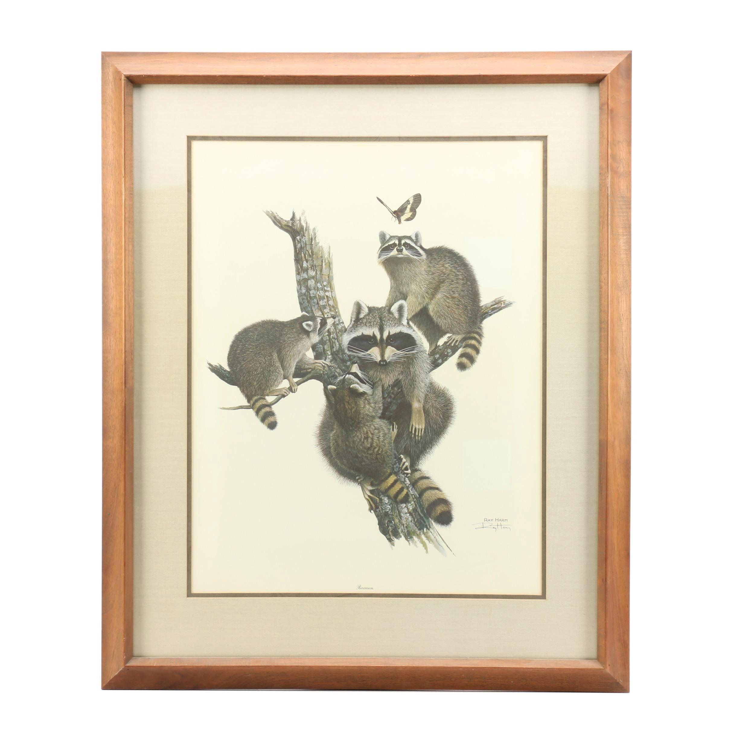 "Ray Harm Offset Lithograph Print ""Raccoon"""