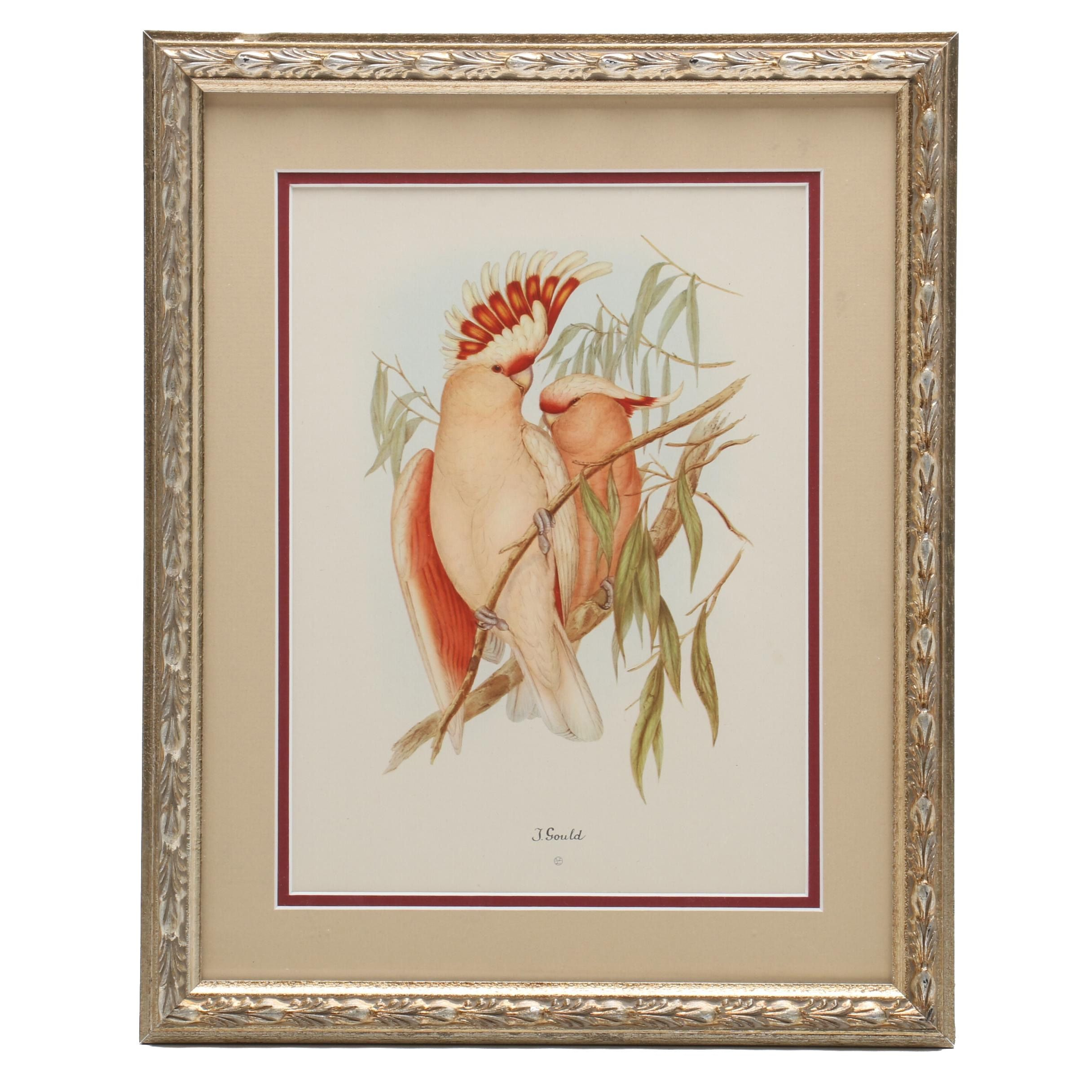 """Offset Lithographic Reproduction after John Gould """"Leadbeater's Cockatoo"""""""