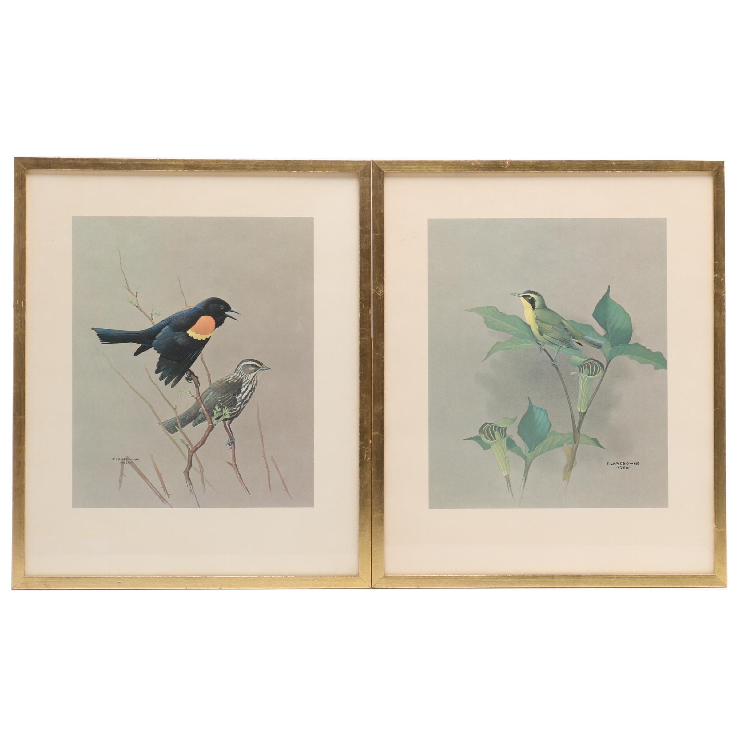 Offset Lithographs after J. Fenwick Landsdowne Ornithological Illustrations