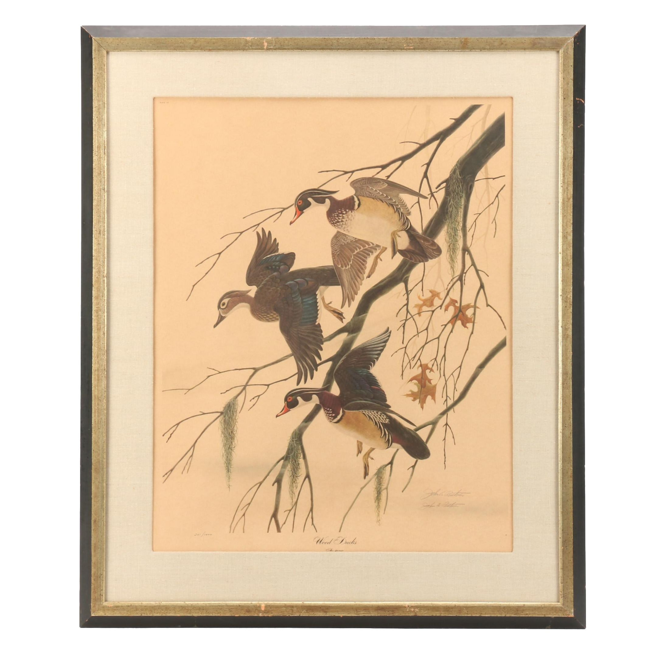 "John Ruthven Limited Edition Offset Lithograph ""Wood Ducks"""