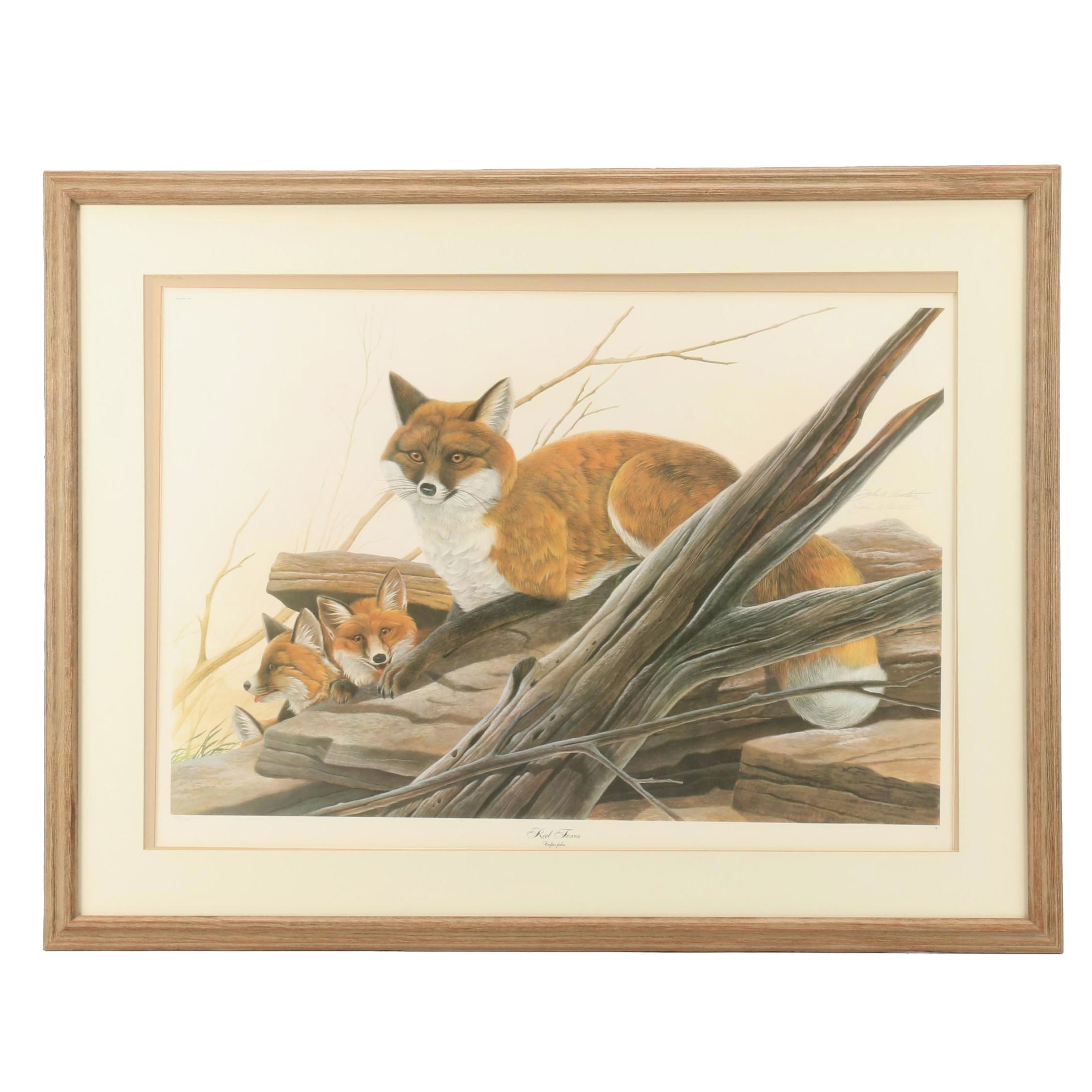"John Ruthven Limited Edition Offset Lithograph ""Red Foxes"""