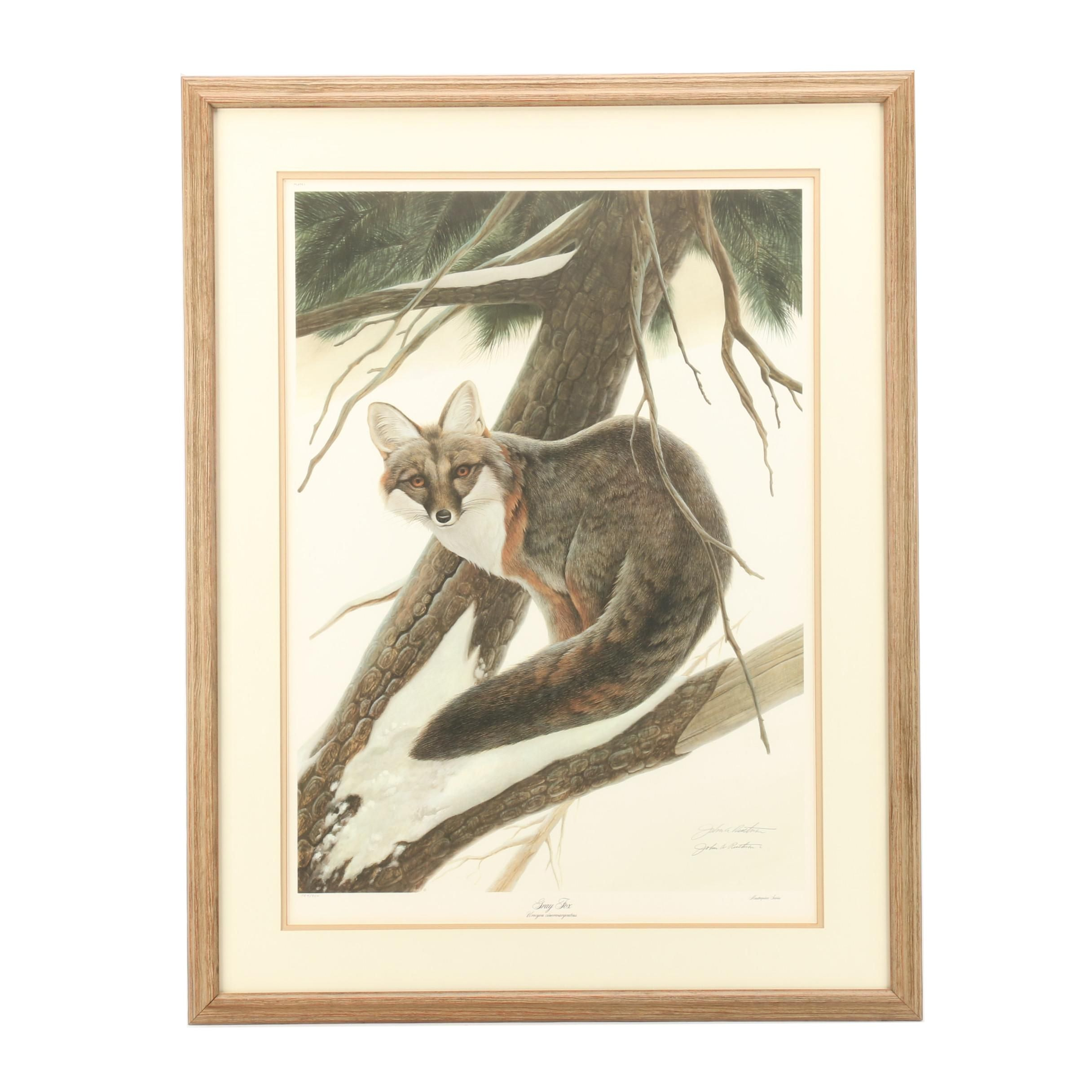 "John Ruthven Limited Edition Offset Lithograph ""Gray Fox"""