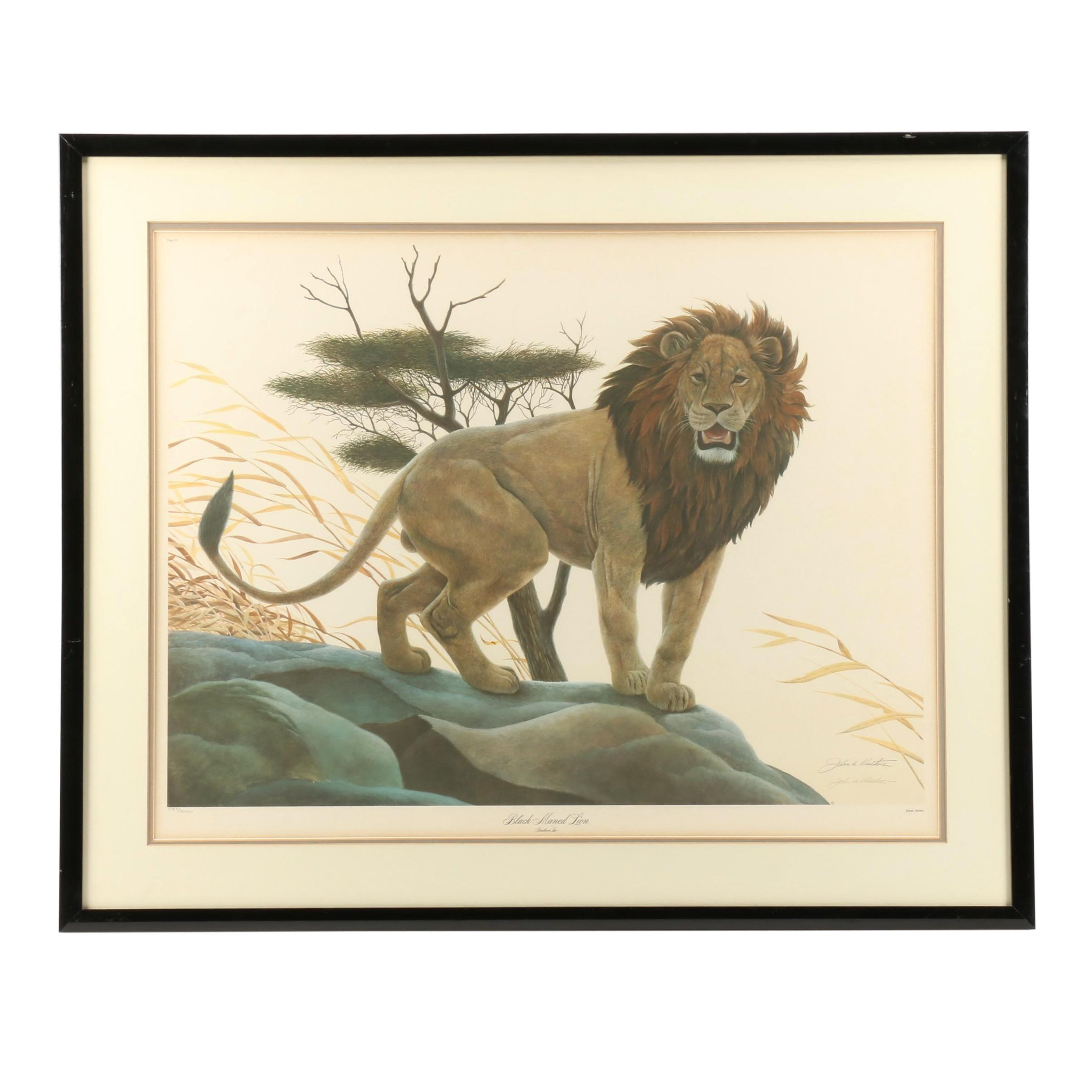 "John Ruthven Offset Lithograph ""Black Maned Lion"""