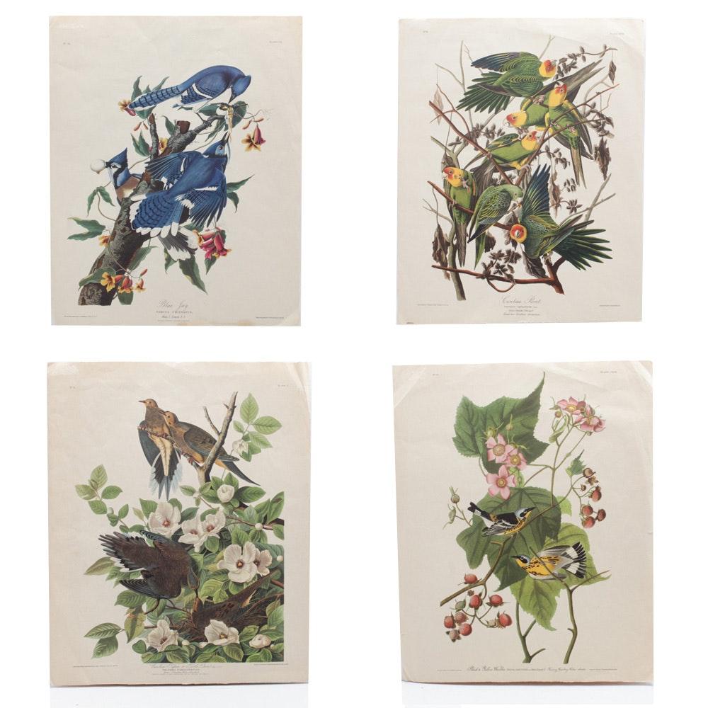 Four Offset Lithographs After John James Audubon