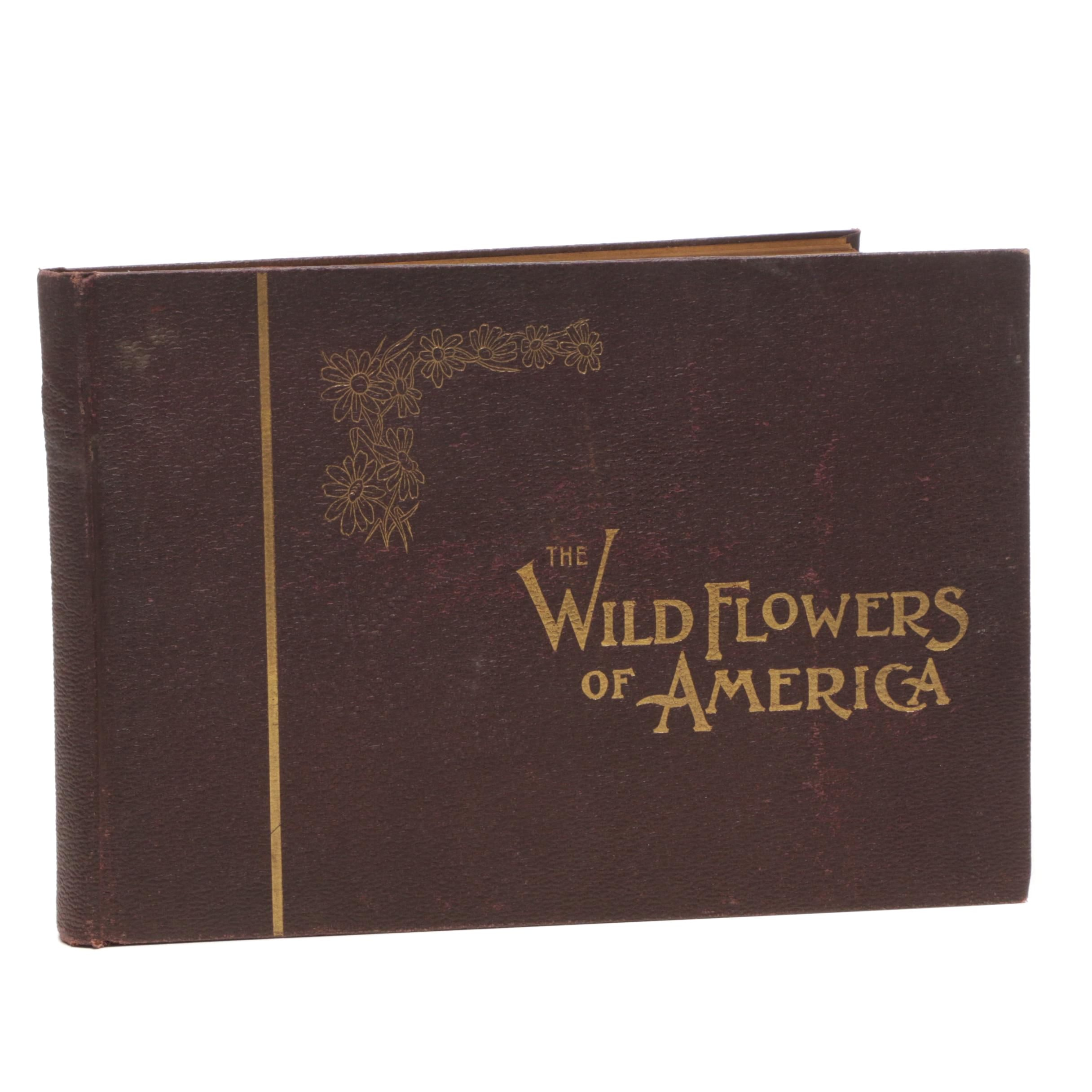 "1894 ""Wild Flowers of America"" by Corp of Special Artists and Botanists"