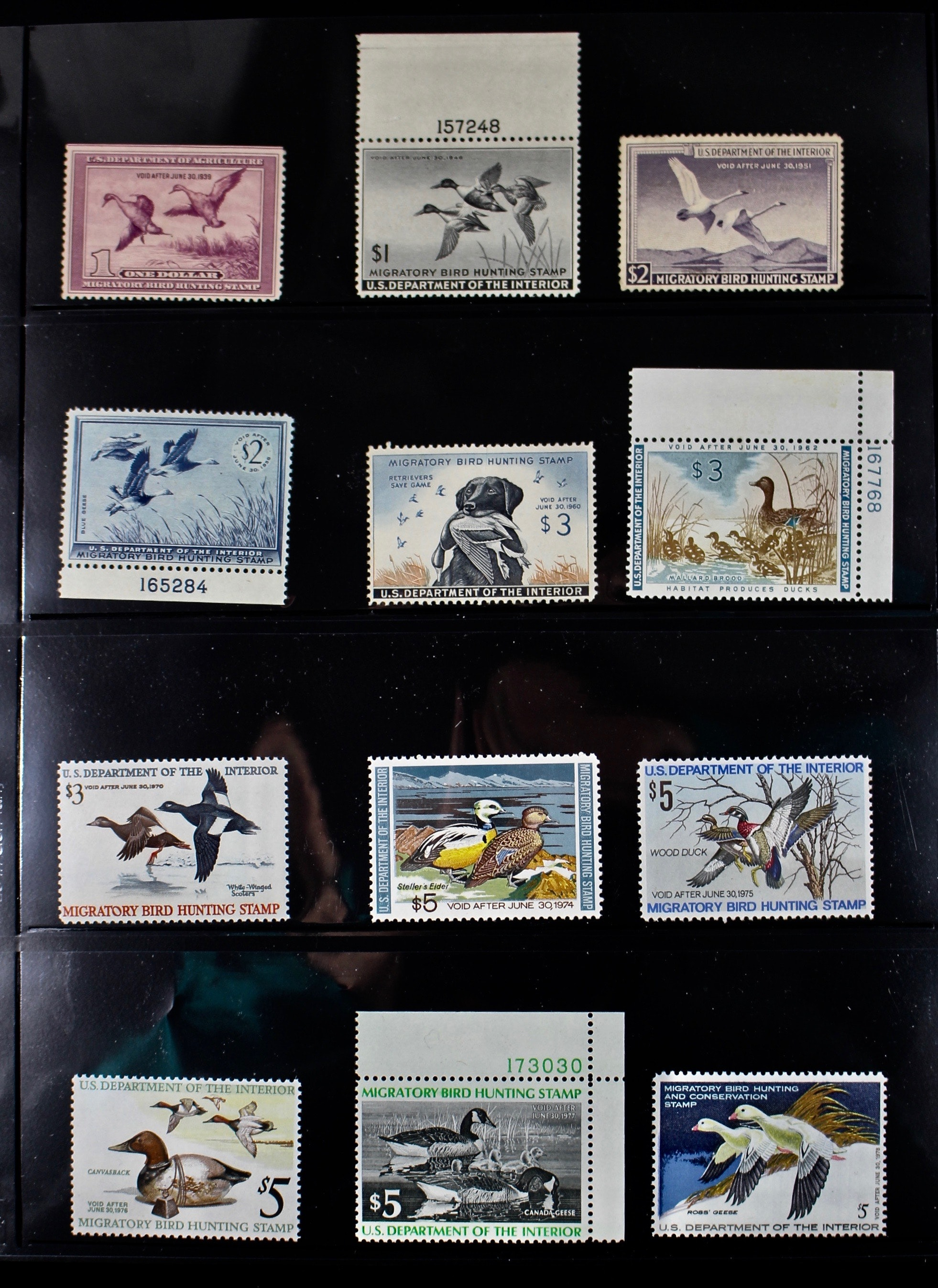 Group of 24 U.S. Department of the Interior Migratory Bird Hunting Stamps