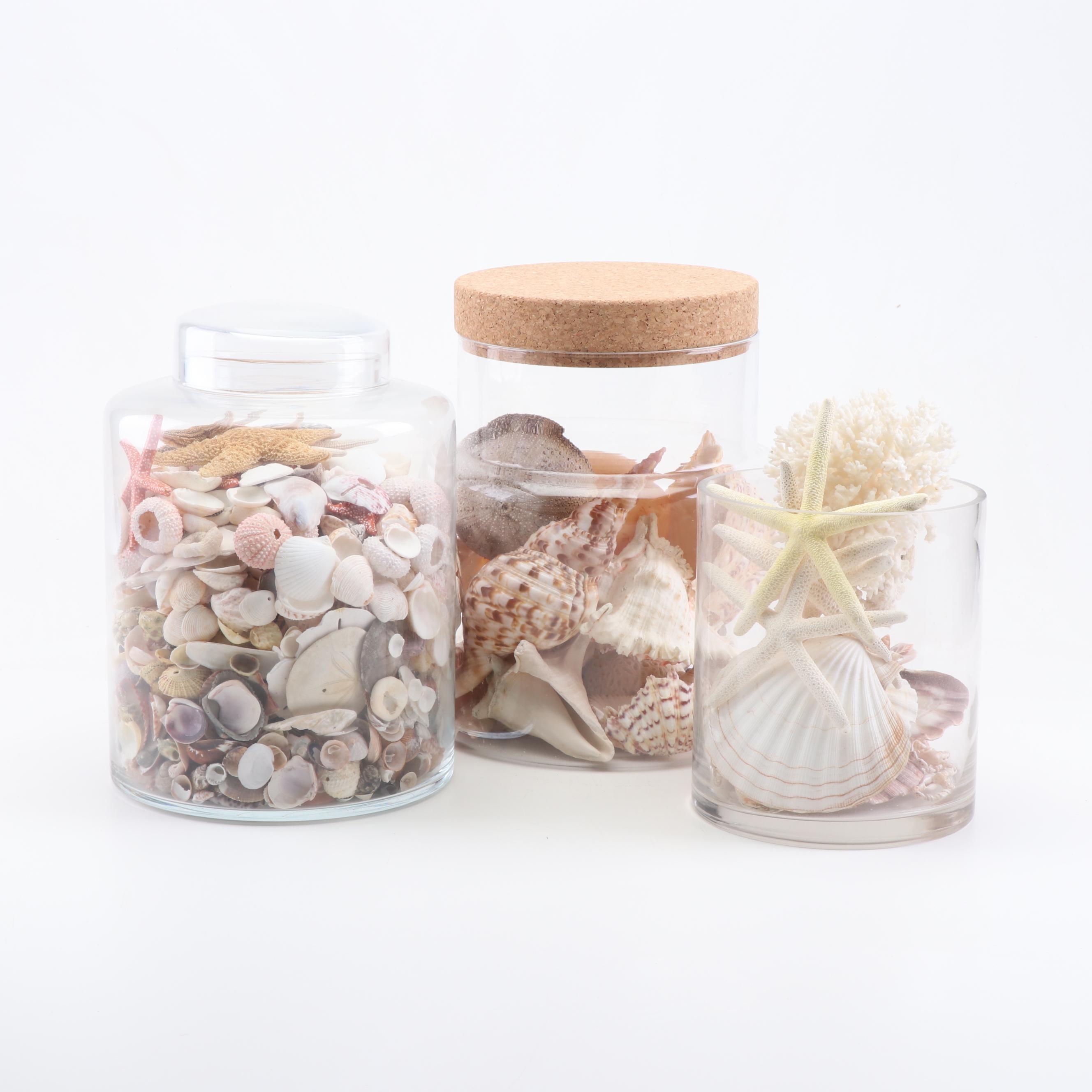 Sea Shells in Glass Jars Table Decor