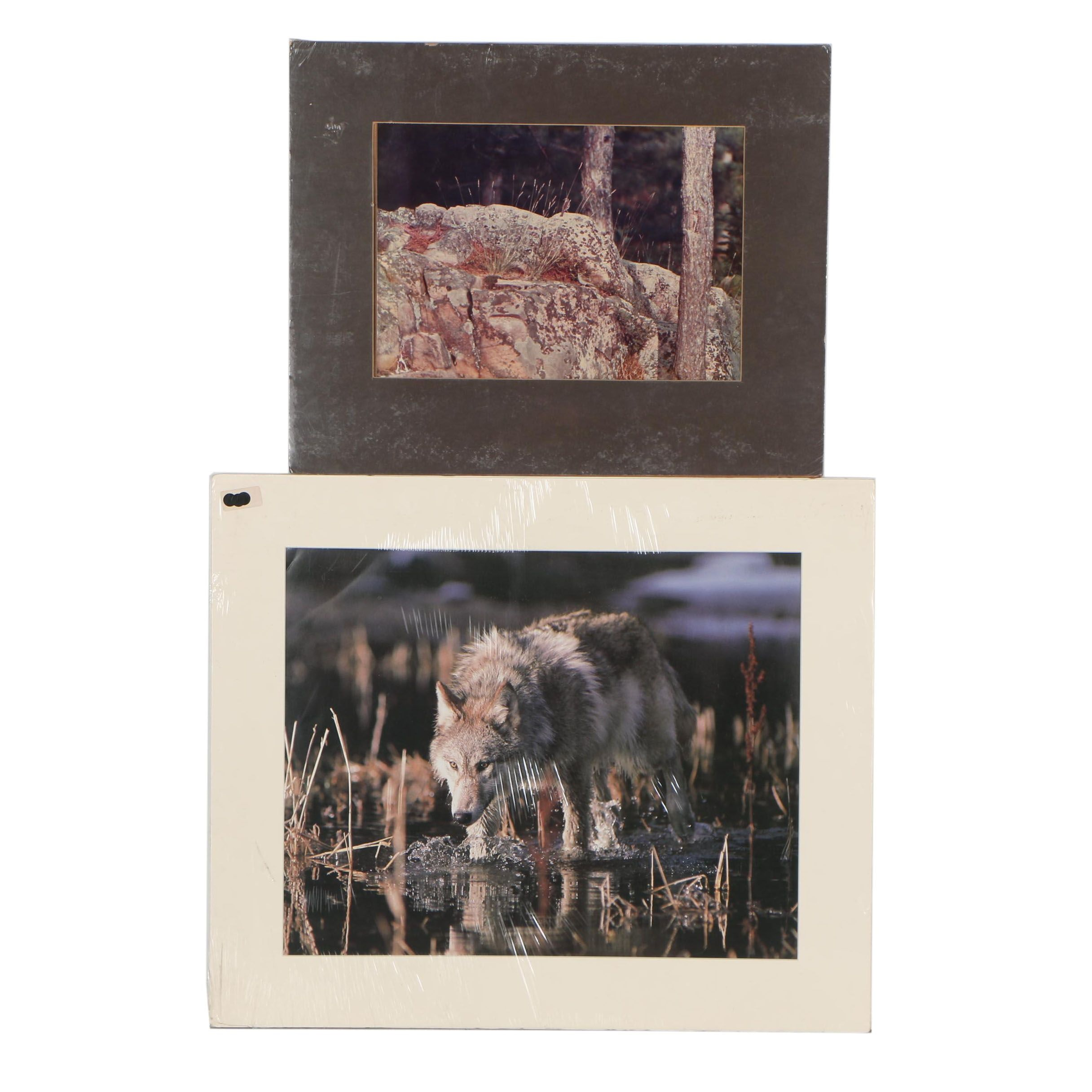 Late 20th Century Wildlife Chromogenic Photograph and Offset Lithograph
