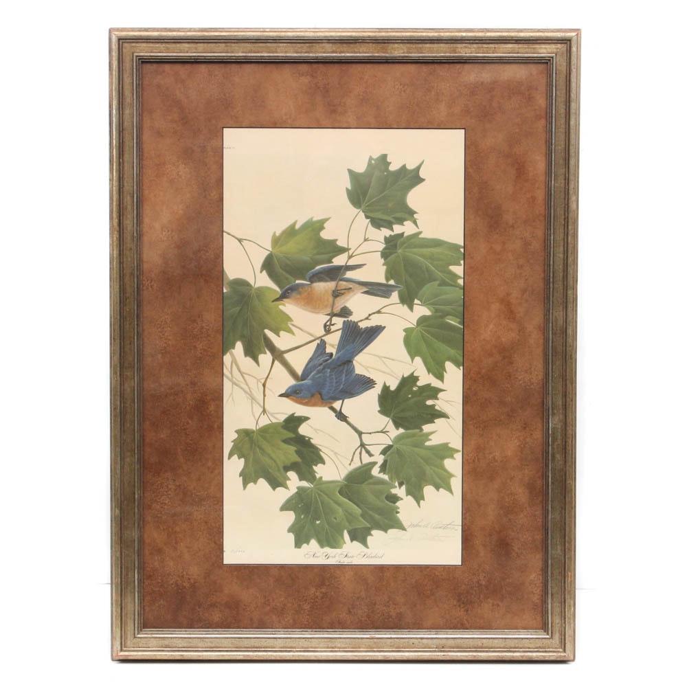 """John A. Ruthven Offset Lithograph """"New York State Bluebird"""""""