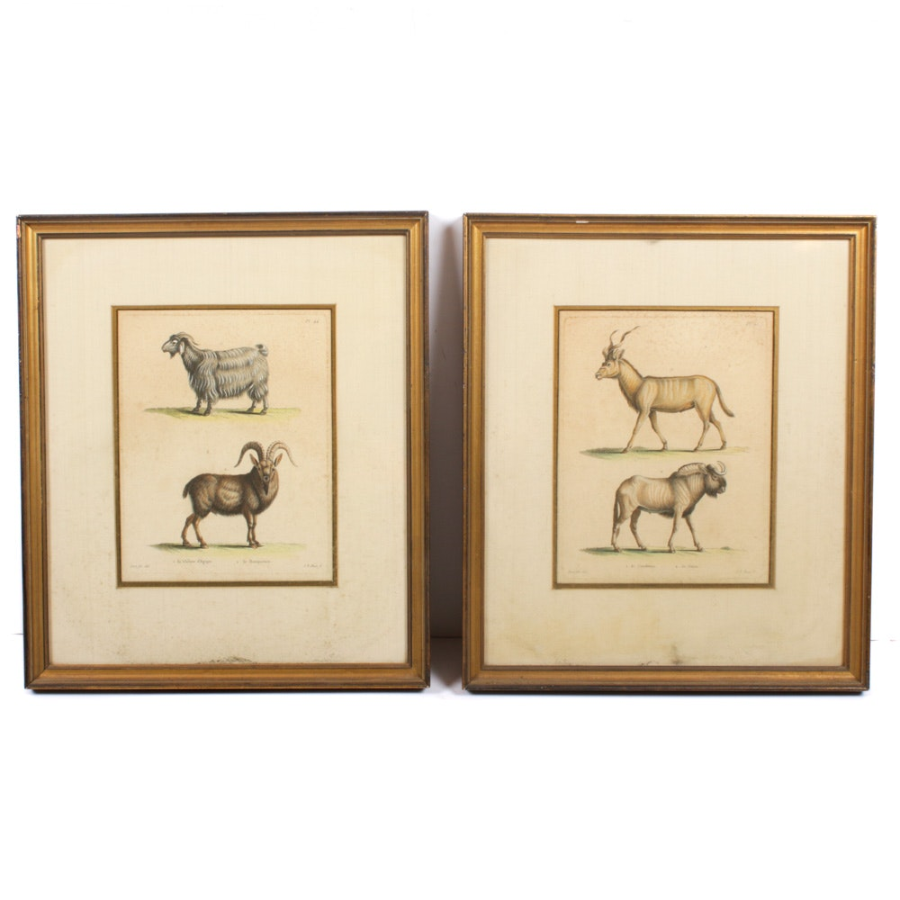 19th Century Hand-Colored Animal Etchings After Jean-Baptiste Huet