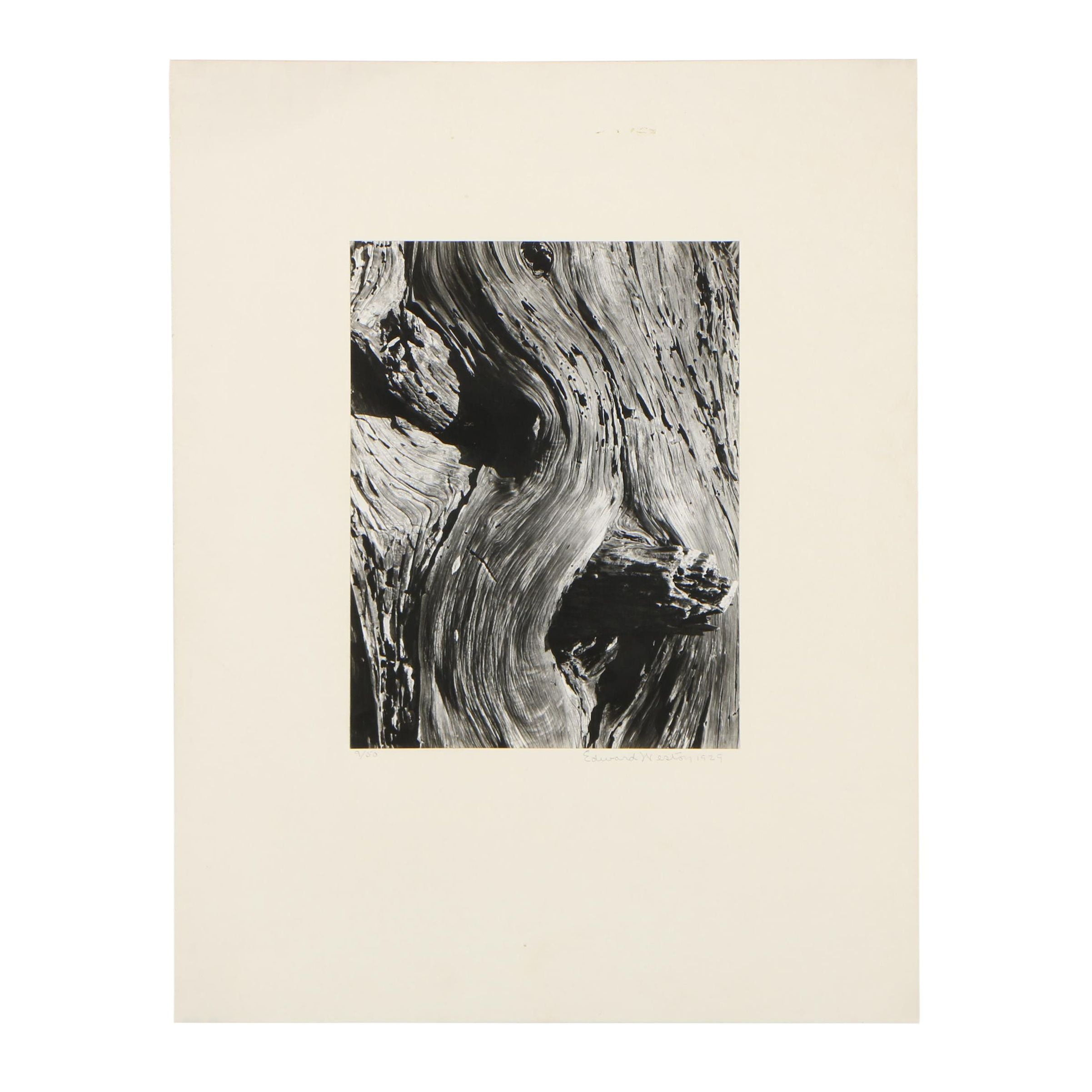 "Edward Weston 1929 Silver Gelatin Photograph ""Monterey Cypress"""