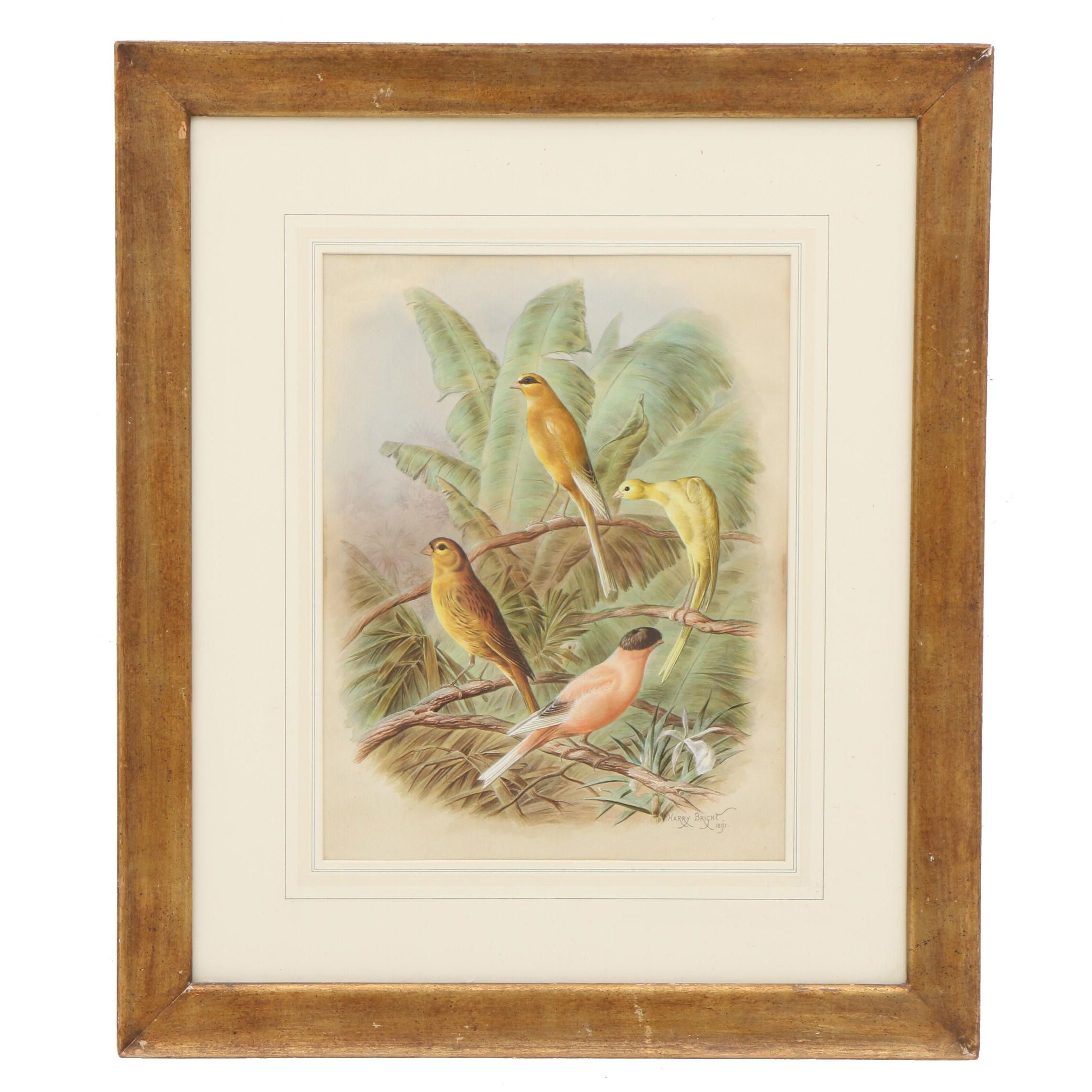Harry Bright Ornithological Watercolor Painting