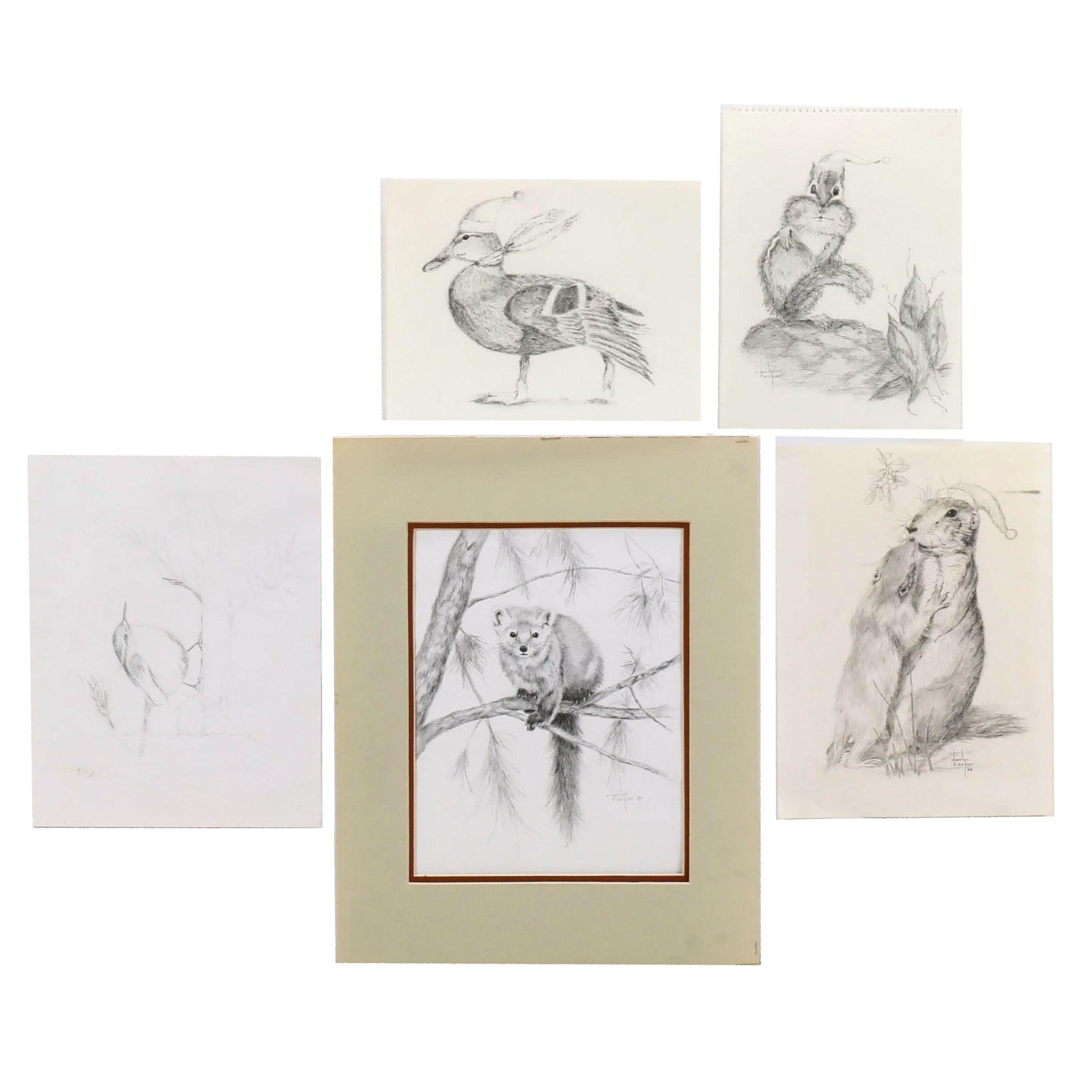 Marilyn Harper Wildlife Graphite Drawings
