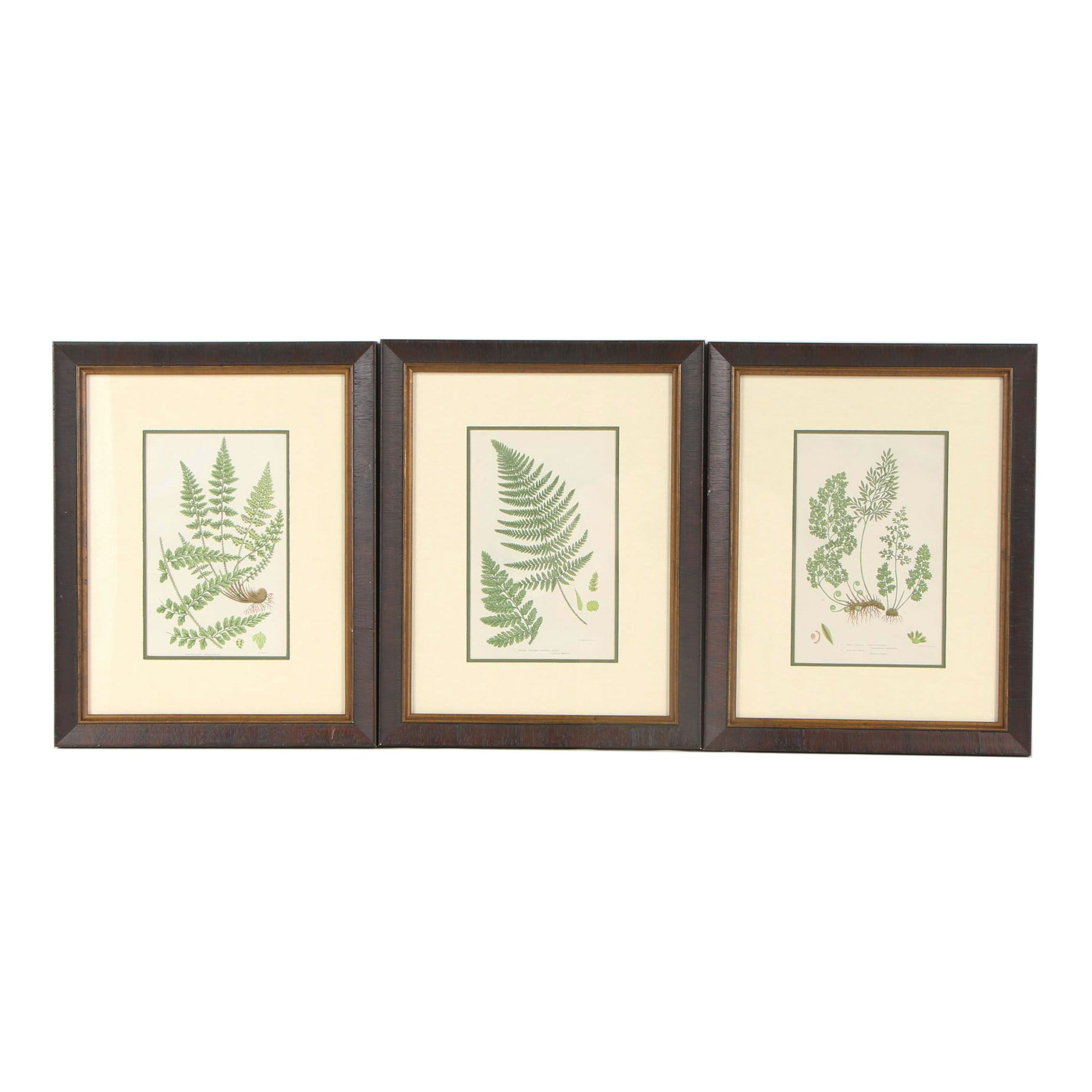 Botanical Lithograph Studies after Anne Pratt and William Dickes