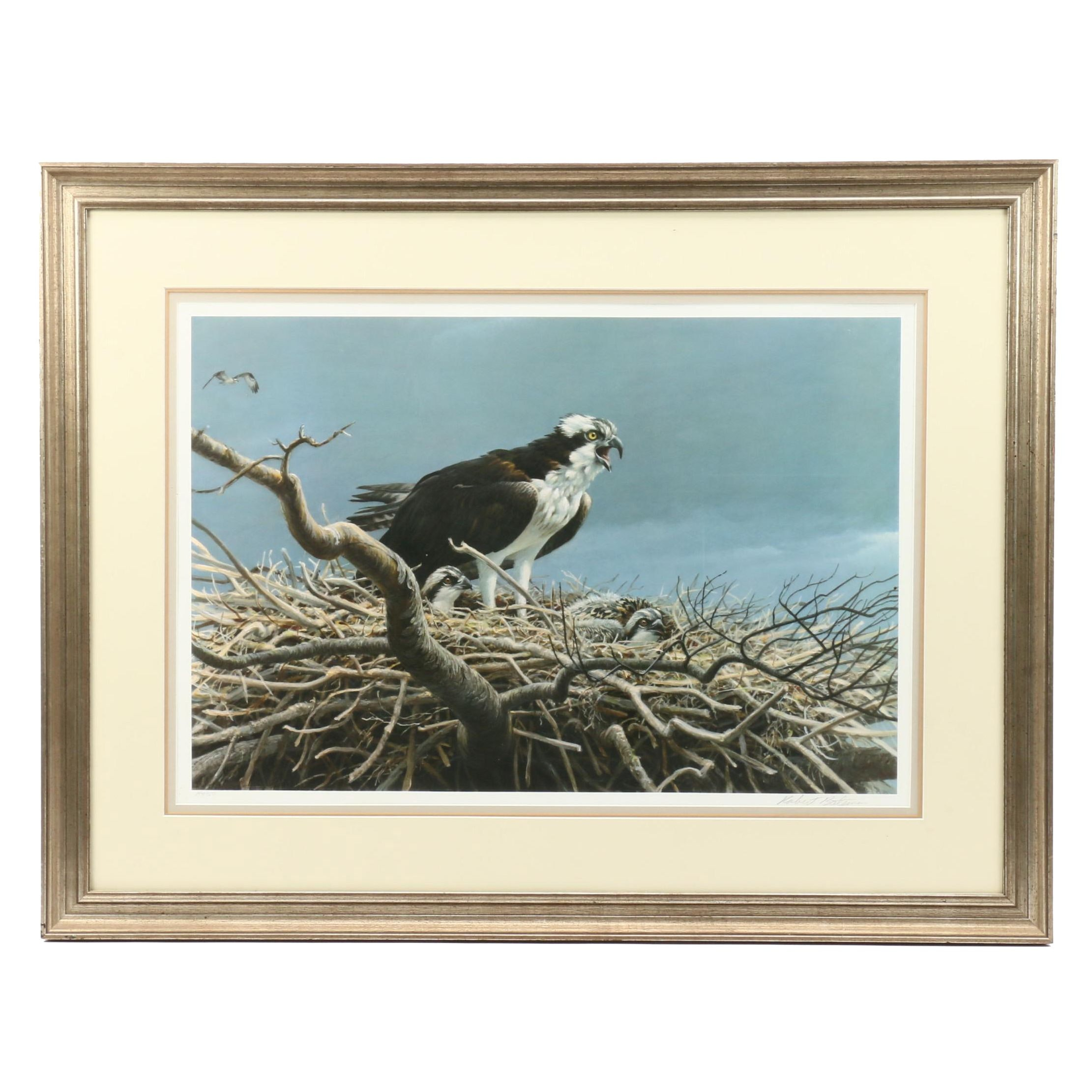 Robert Bateman Offset Lithograph of Eagle with Eaglets in Nest