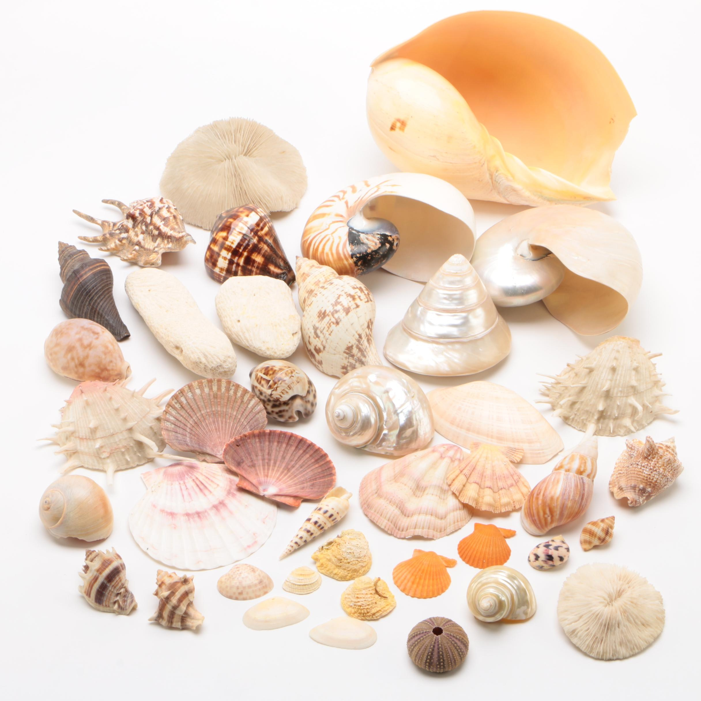Sea Shell Collection including Nautilus Shells and Coral