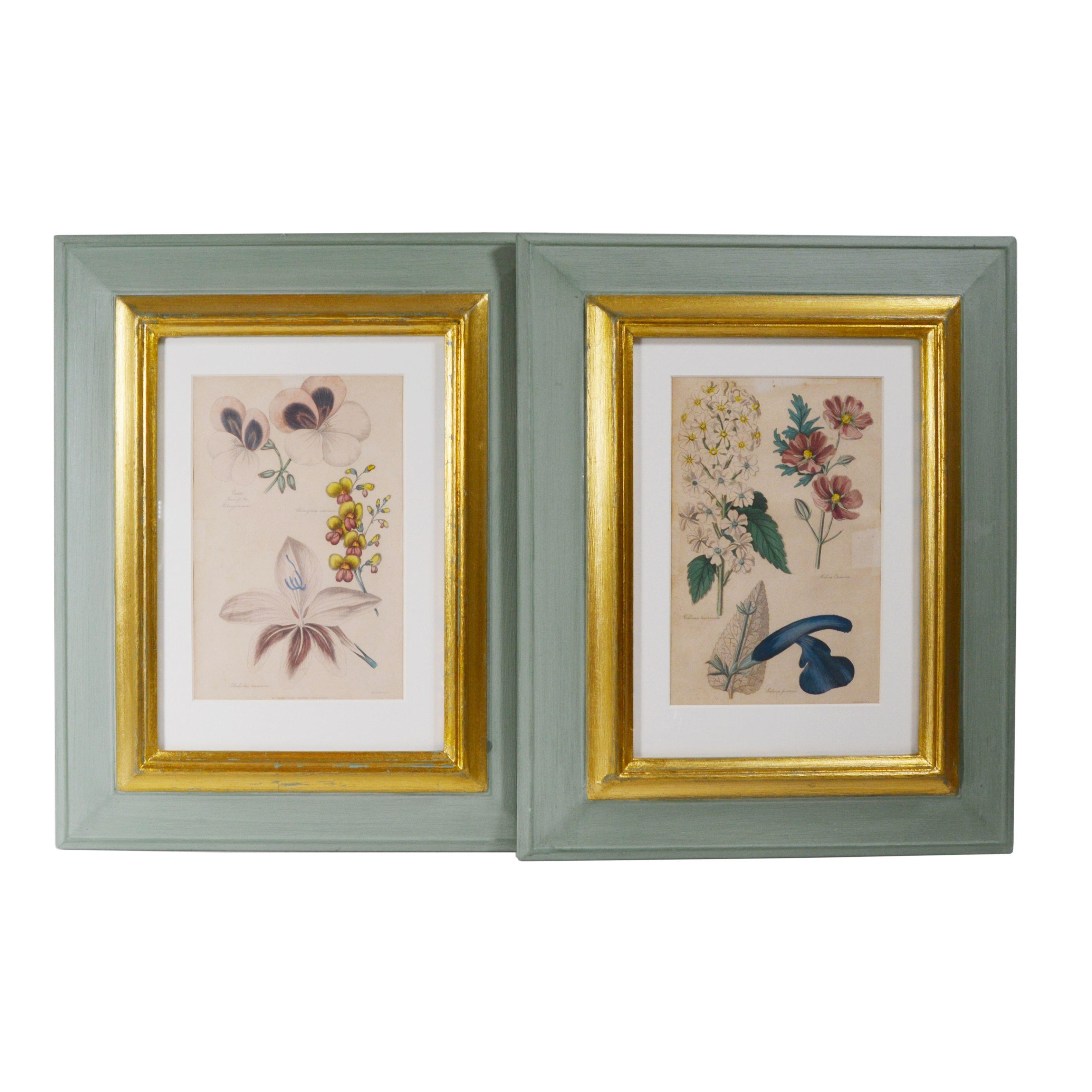 Botanical Colored Engravings After Alfred Adlard