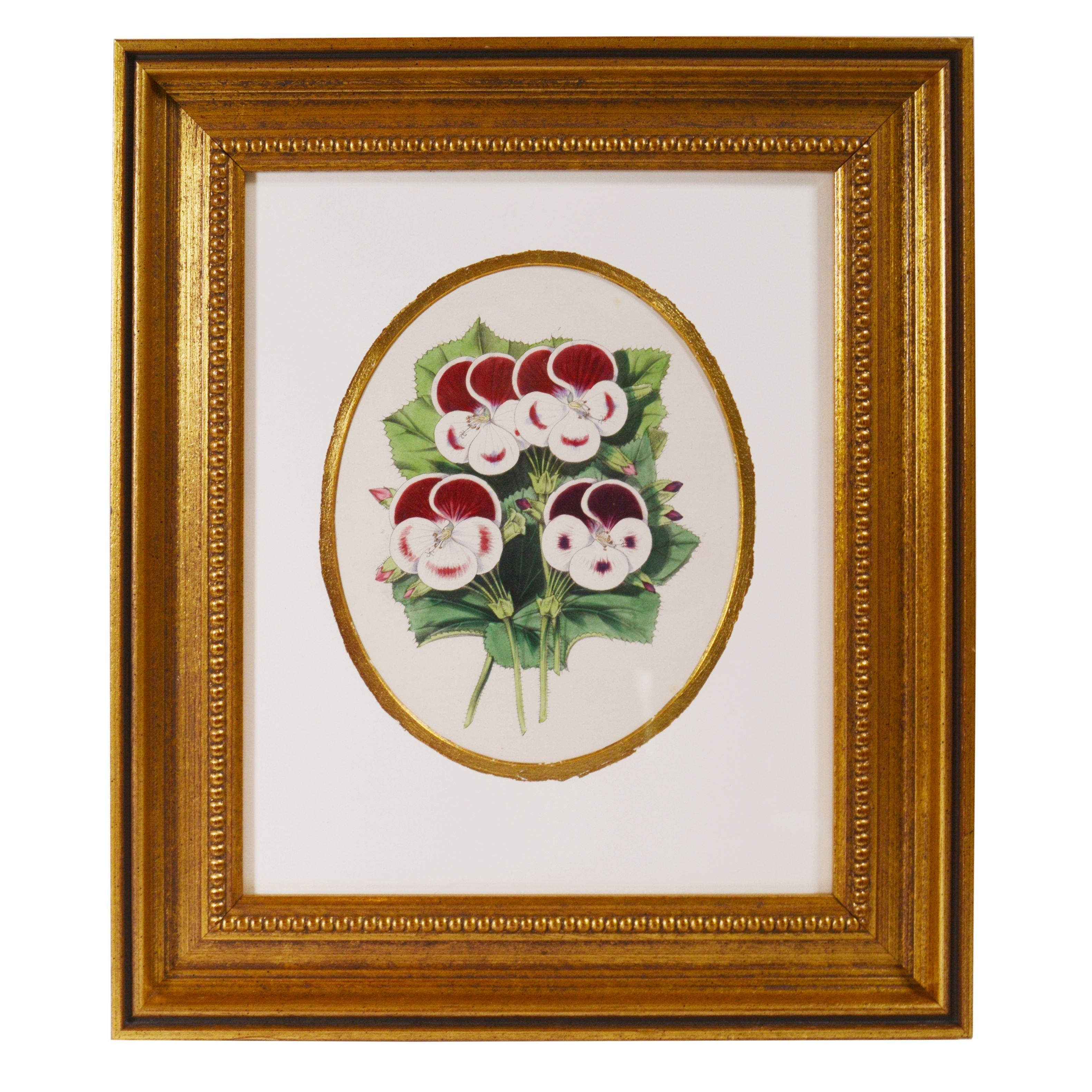 Lithograph of Pansies
