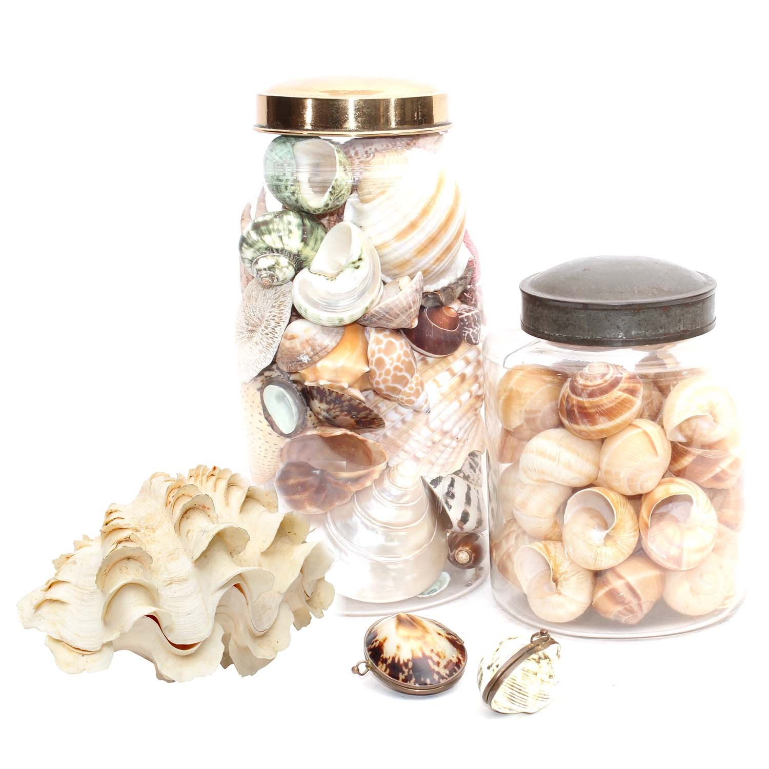 Shell Trinket Boxes with Brass Closures, and Shells in Glass Jars