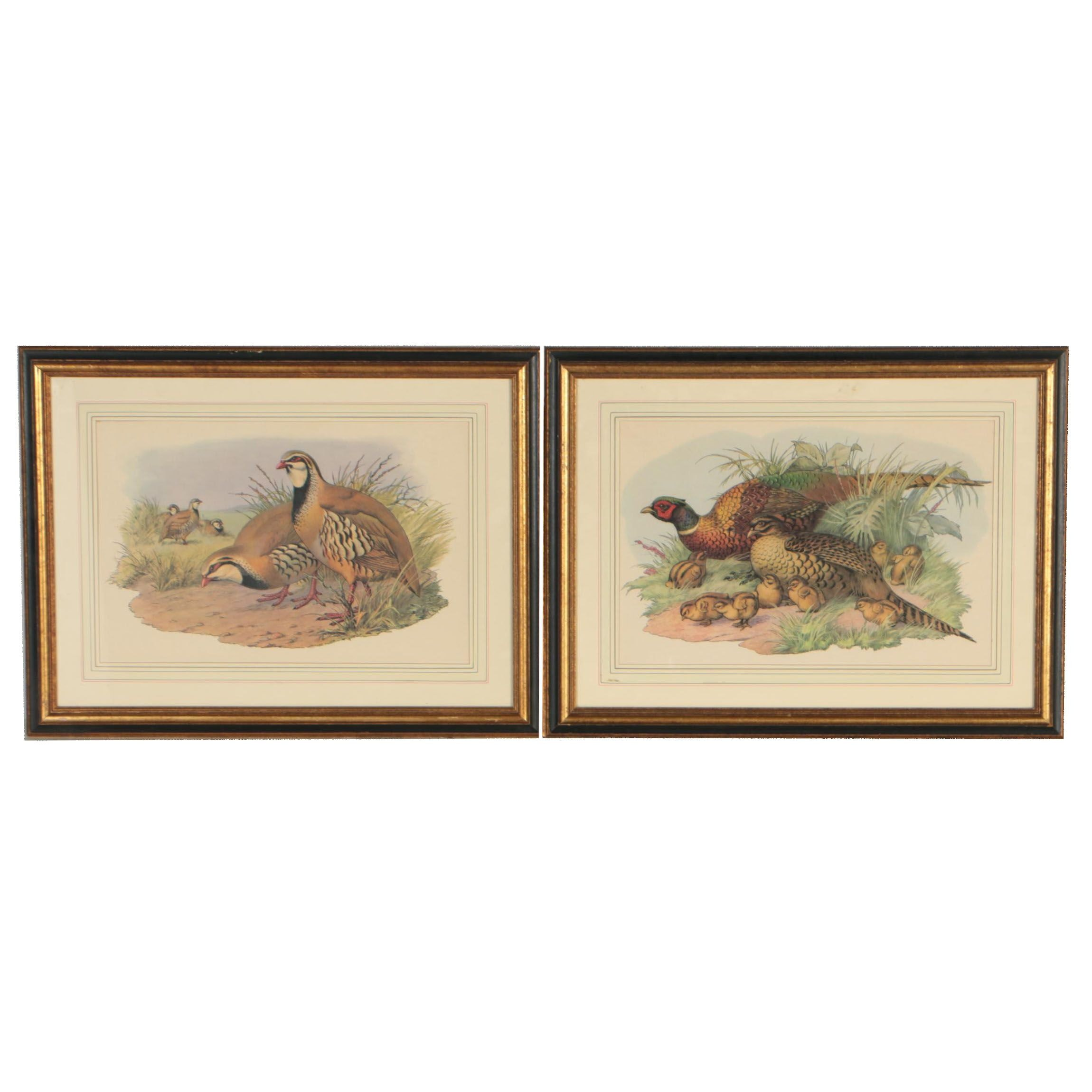 Late 20th Century Wildlife Offset Lithographs of Avian Illustrations