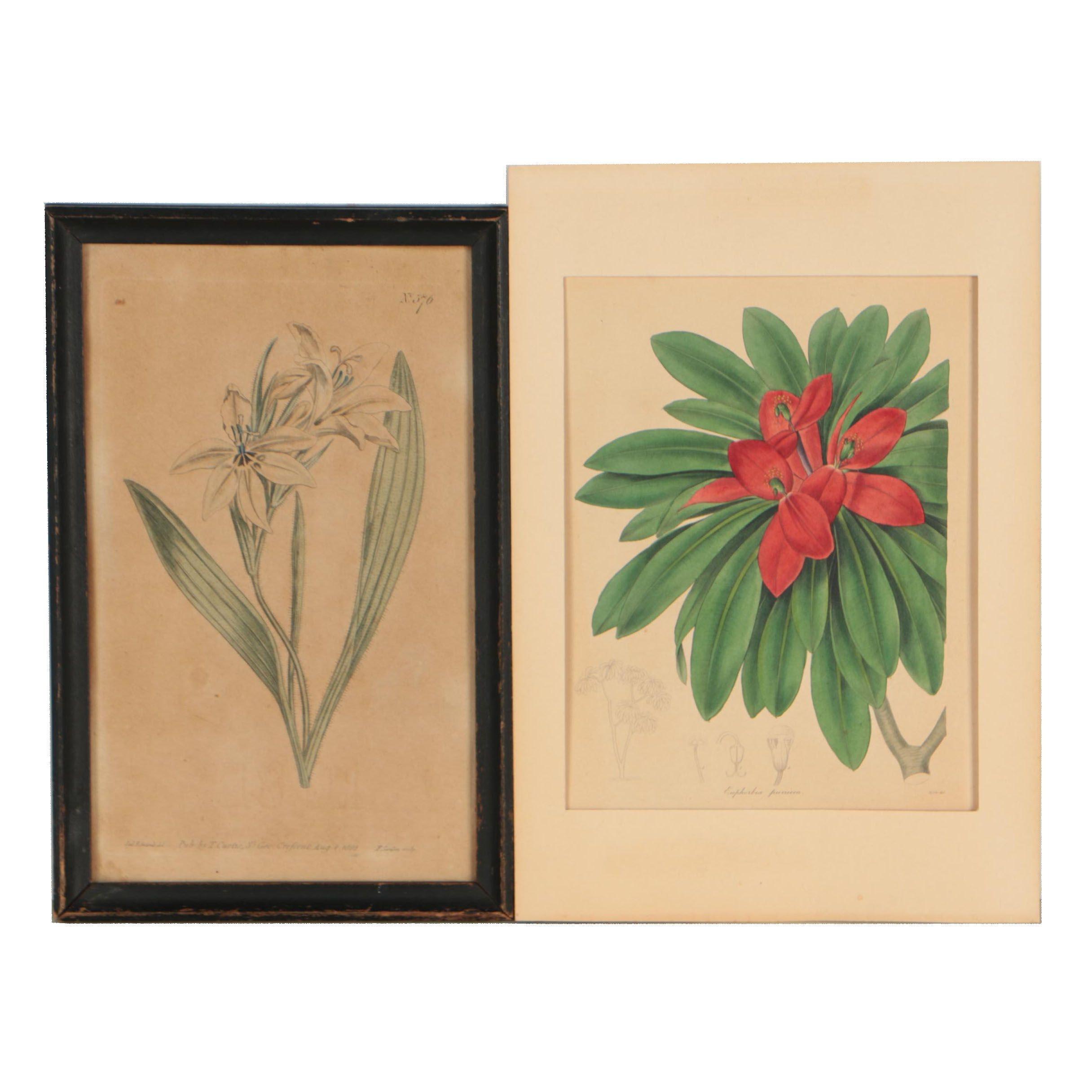 "Botanical Etchings from ""Curtis's Botanical Magazine"" and ""The Botanist"""