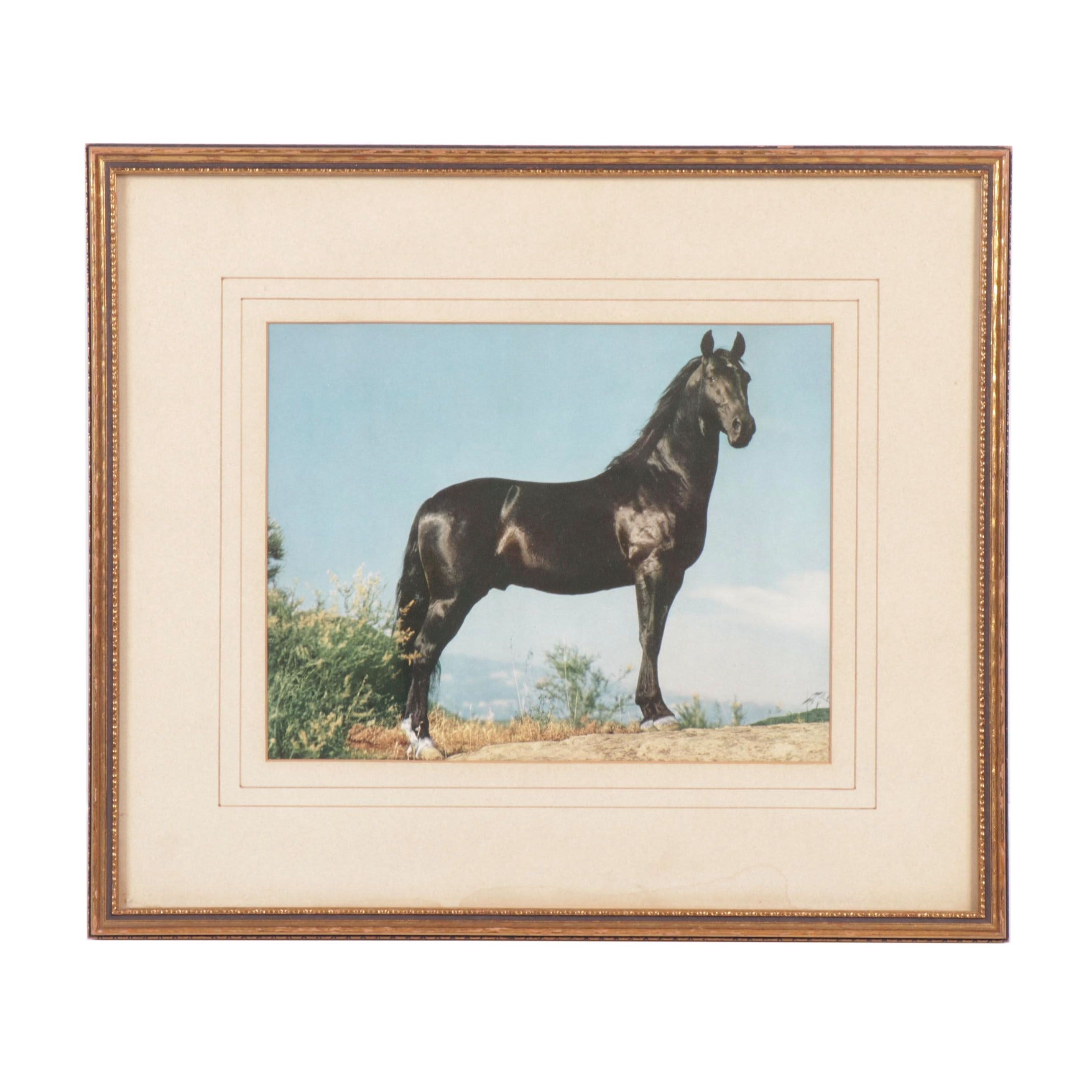 Late 20th Century Giclée of a Horse
