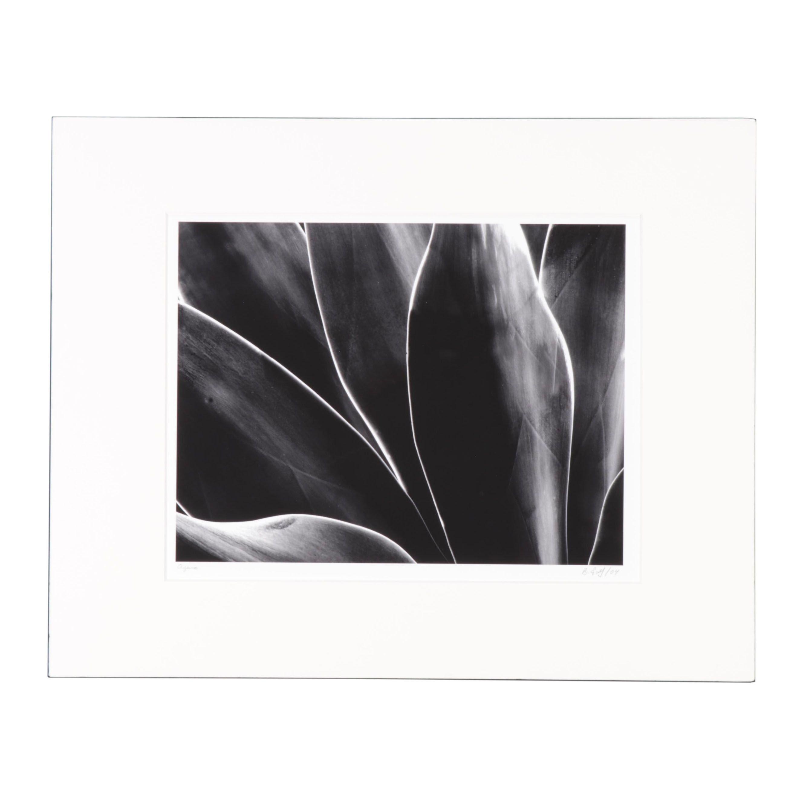 "Barry Wolf Silver Gelatin Print ""Agave"""