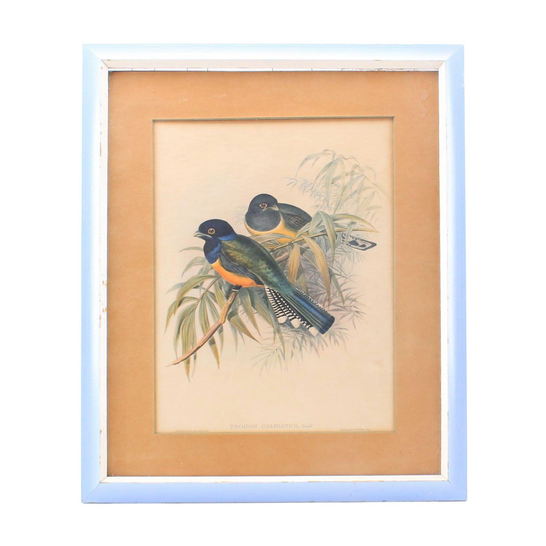 """J. Gould & C. Richter Color Lithograph """"Trogon Caligatus"""""""