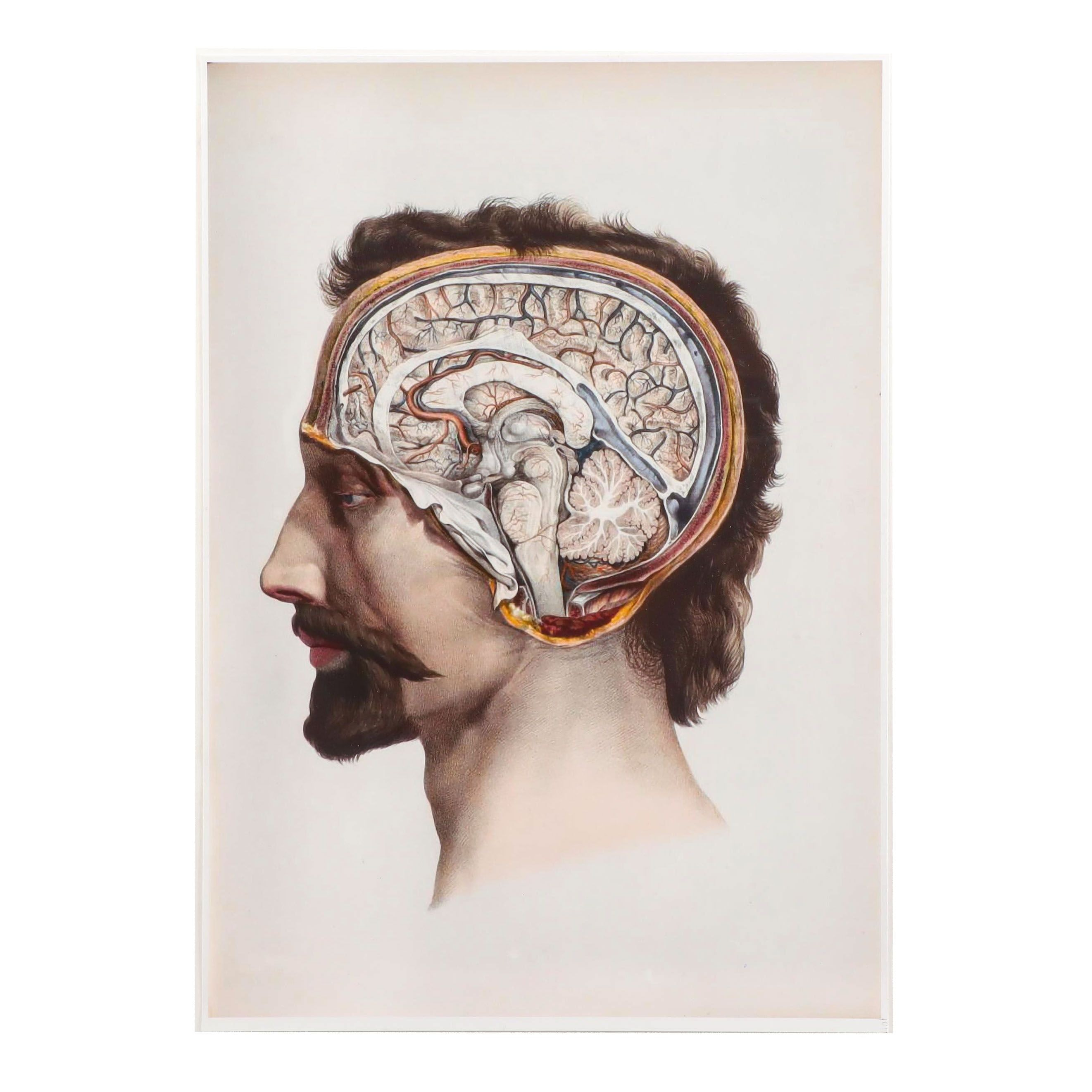 Giclee after 19th Century  Medical Illustration of Human Brain