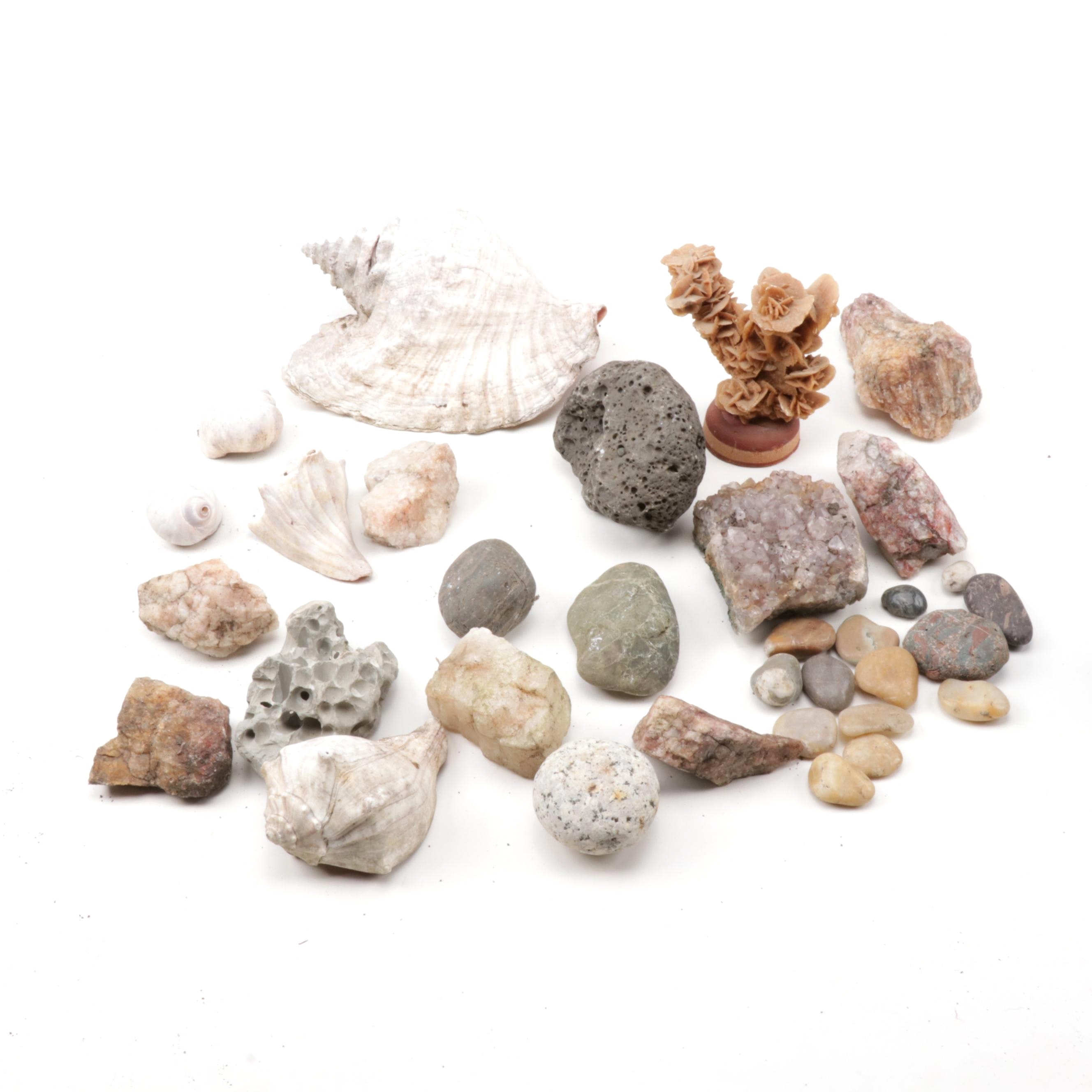 Rock, Mineral, and Shell Specimens