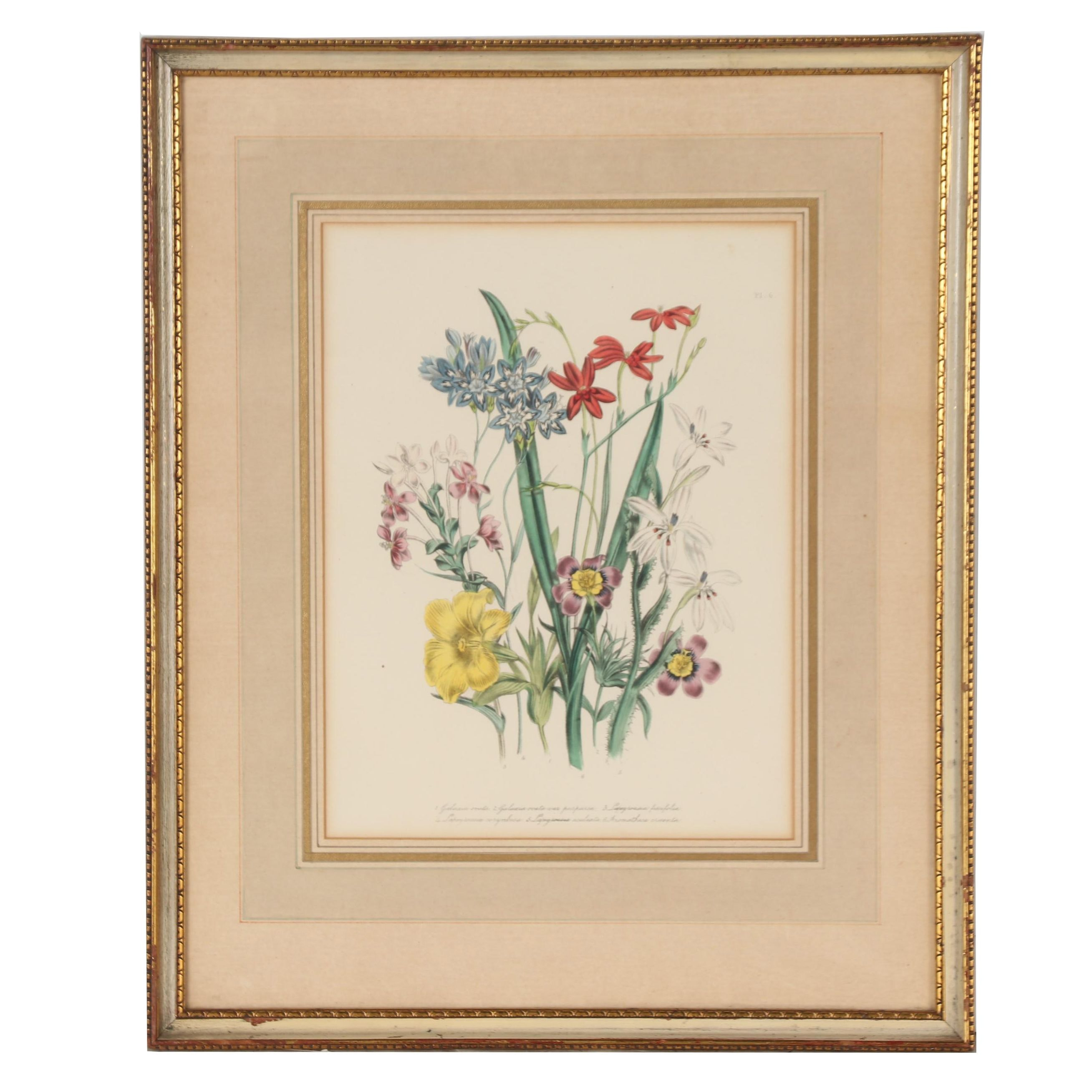 "Jane Webb Loudon Hand Colored Lithograph from ""The Ladies' Flower Garden"""